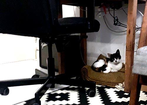 Milly-under-desk.jpg