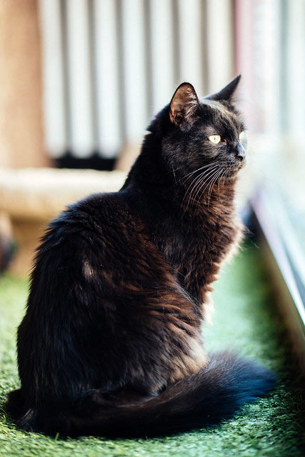 Teddy is a very handsome cat: But he's also a funny cat with a big personality!