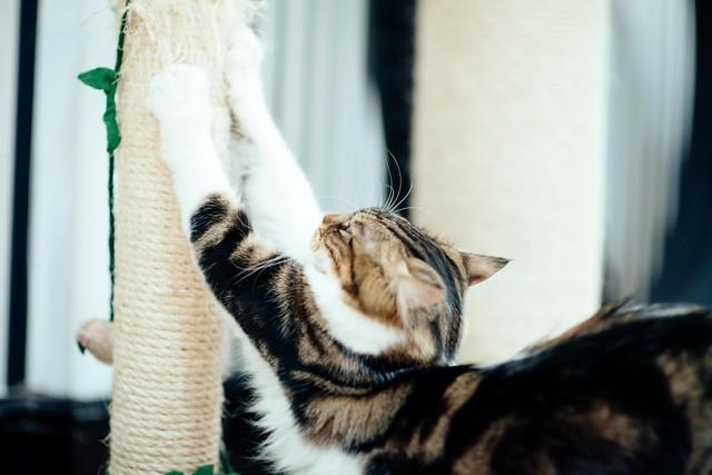 Obie-stretch.jpg
