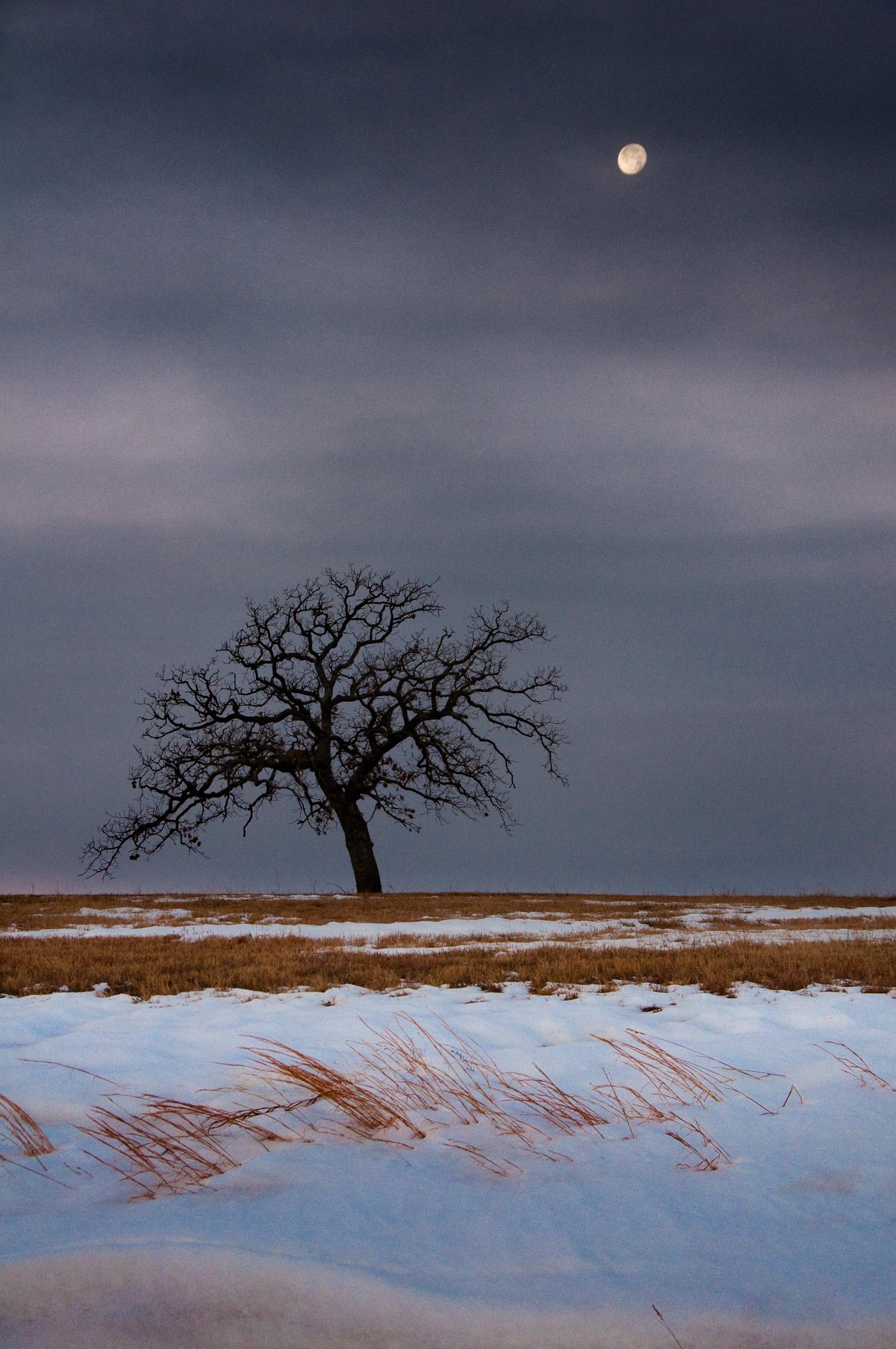 Dead of Winter (Lutheran Moon).jpg