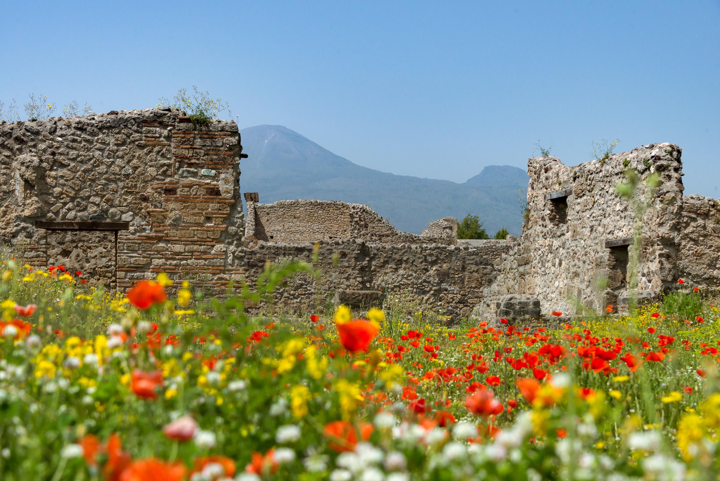 Poppies of Pompeii.jpg