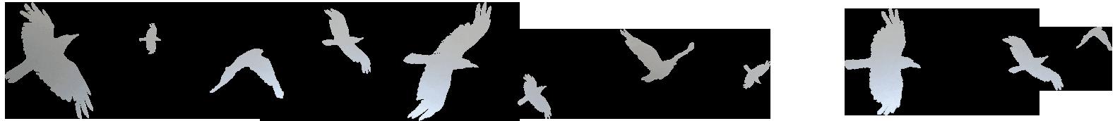 CrowFoil-compressor copy.png