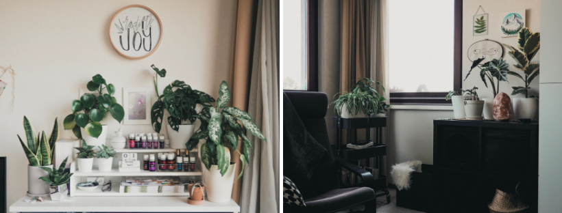 My Plant Fam: What I've Learned in My First Year as a Plant Mom | tawnimarie.com | yearoneplantmom_livingroomB_tawnimarie.png