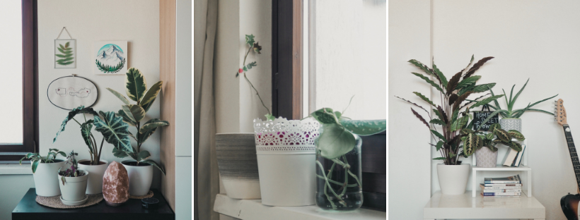 My Plant Fam: What I've Learned in My First Year as a Plant Mom | tawnimarie.com | yearoneplantmom_livingroomA_tawnimarie.png