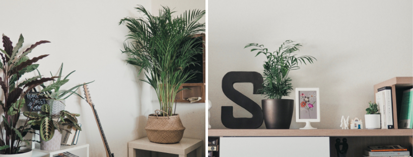 My Plant Fam: What I've Learned in My First Year as a Plant Mom | tawnimarie.com | yearoneplantmom_livingroomC_tawnimarie.png