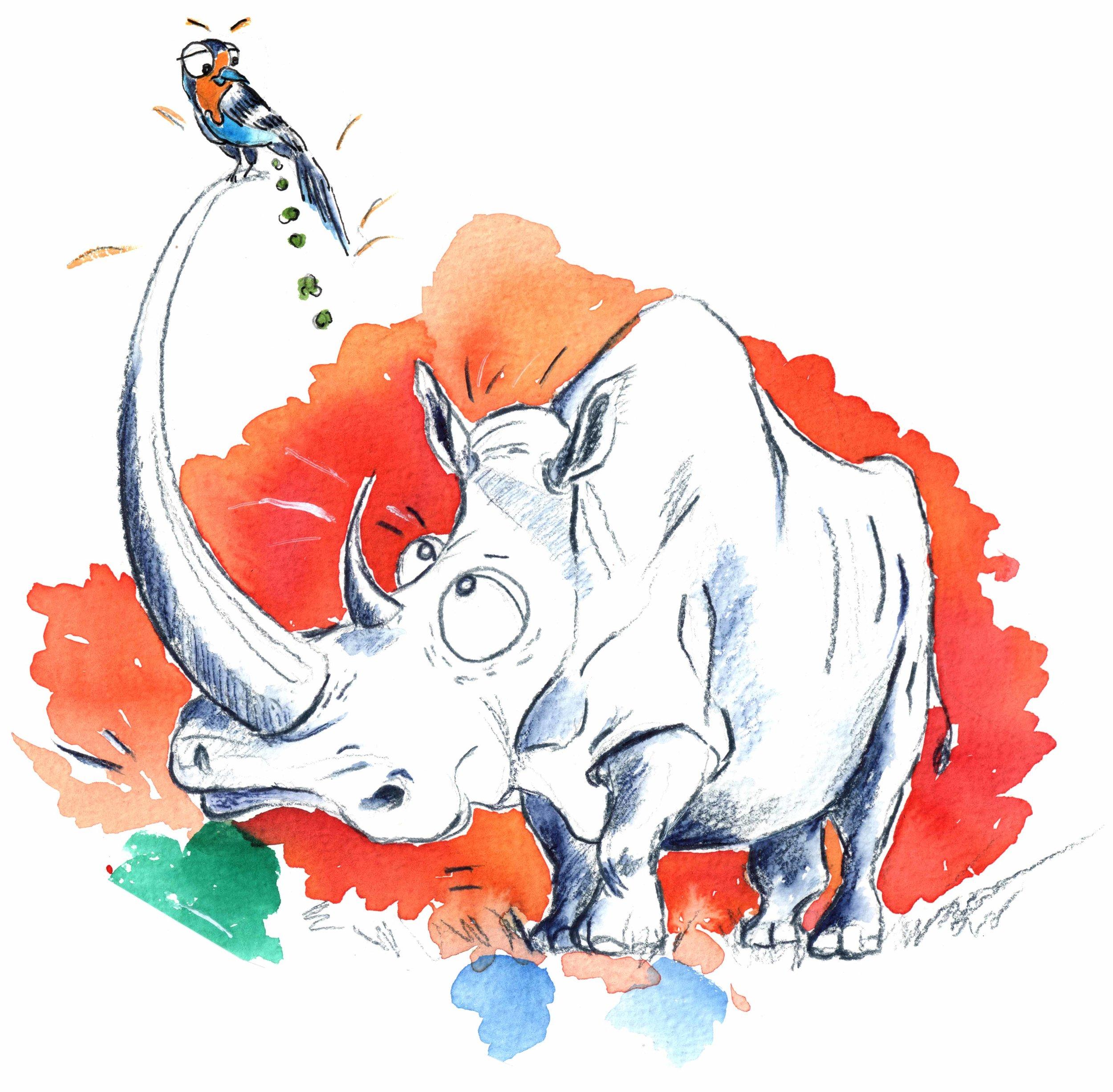 animal illustration, rhino.jpg