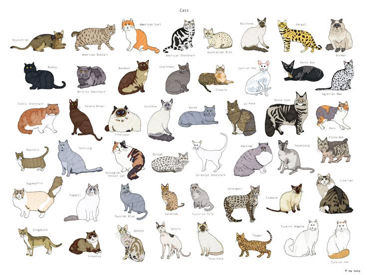 cat breeds LR copy 2.jpg