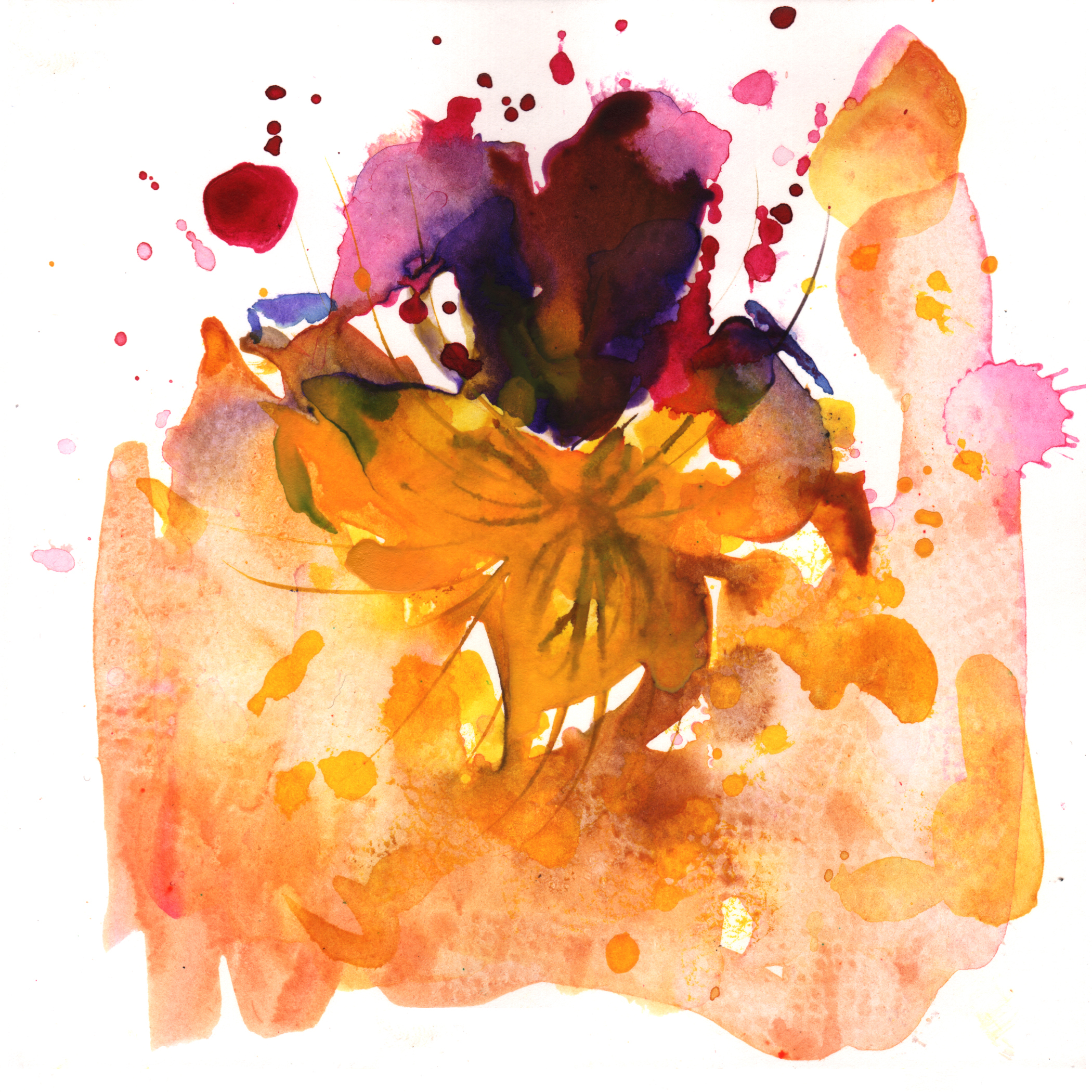 23.Viola.Tricolor.3.3.14.jpg