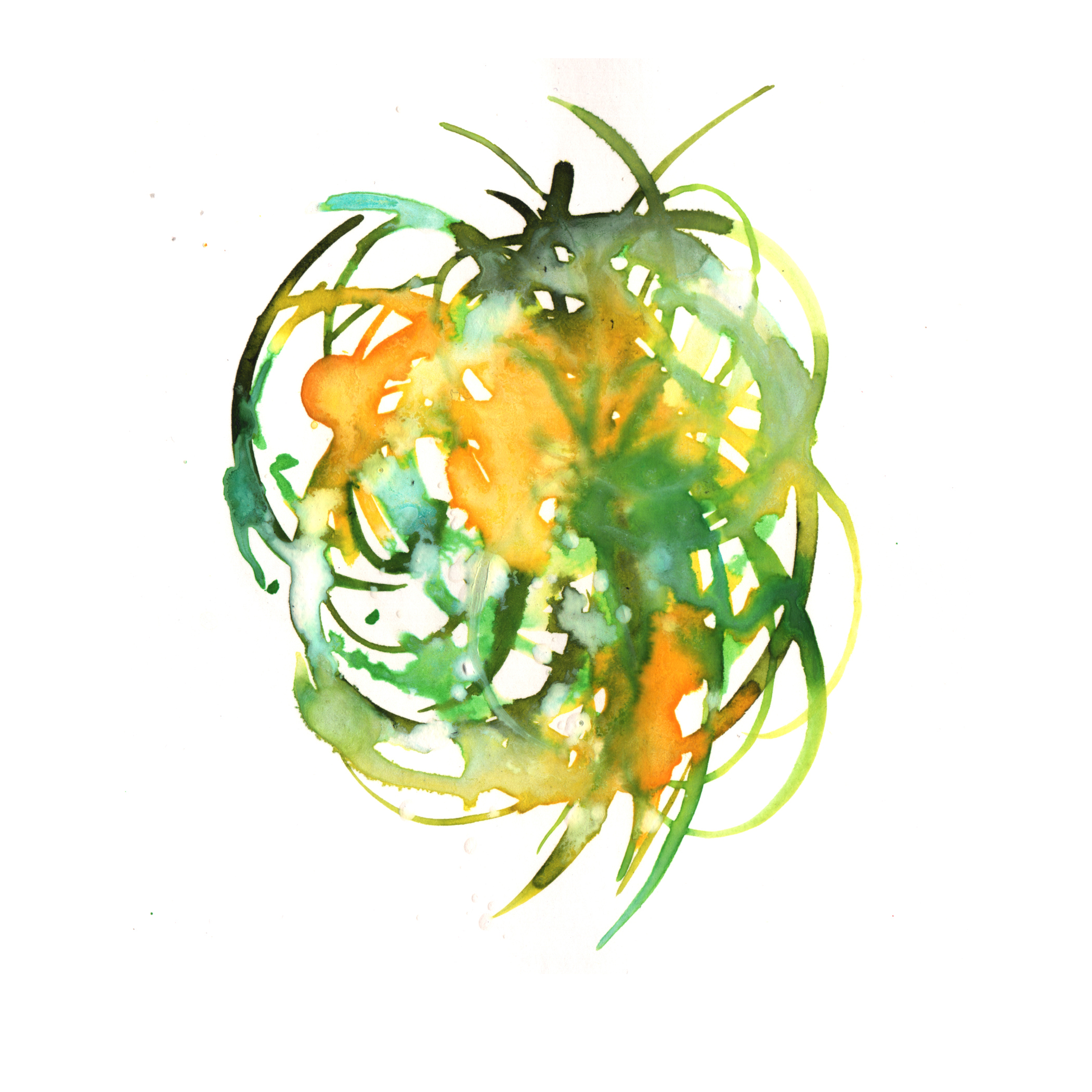 31.Bromeliad.3.11.14.jpg