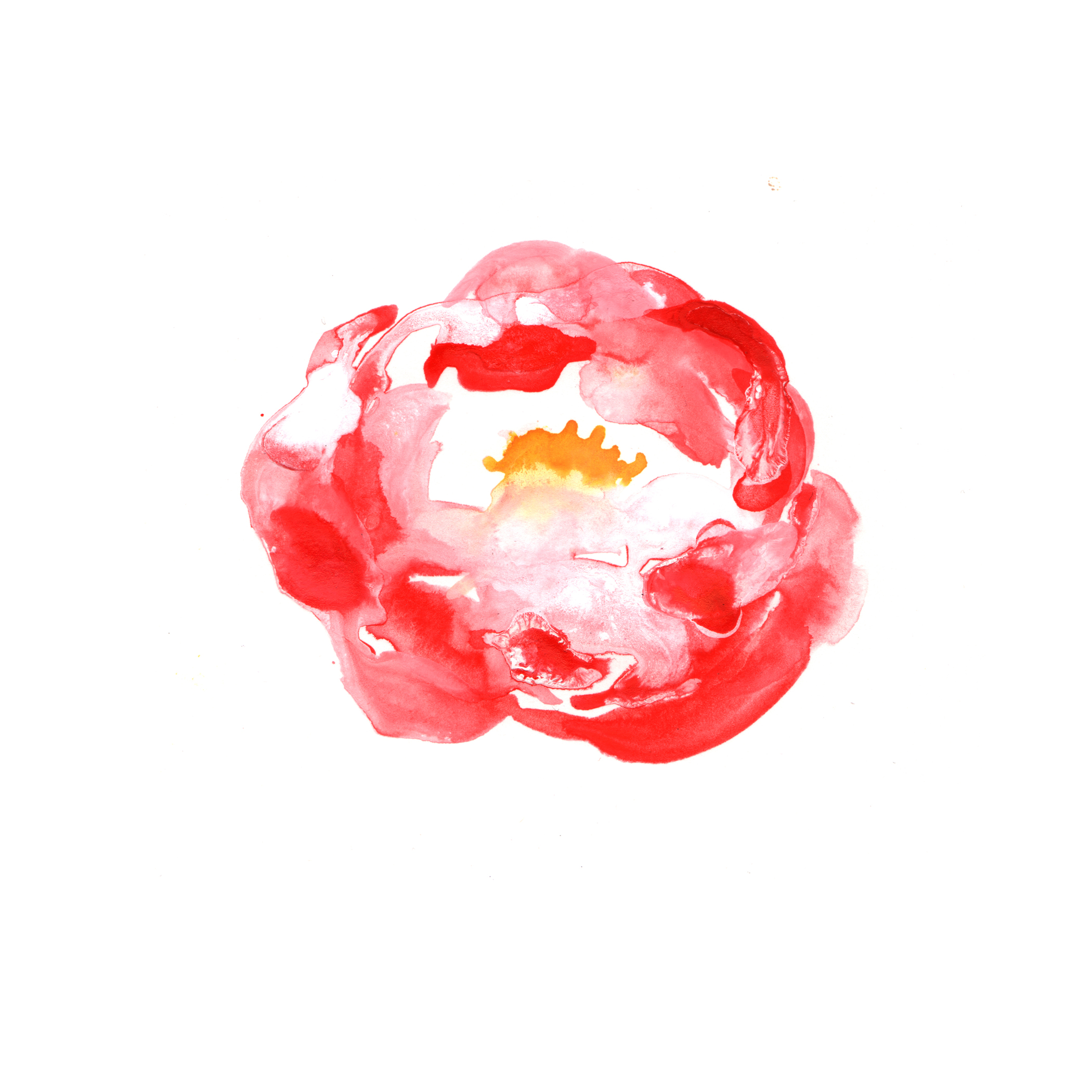 35.Pink.Peony.3.15.14.jpg