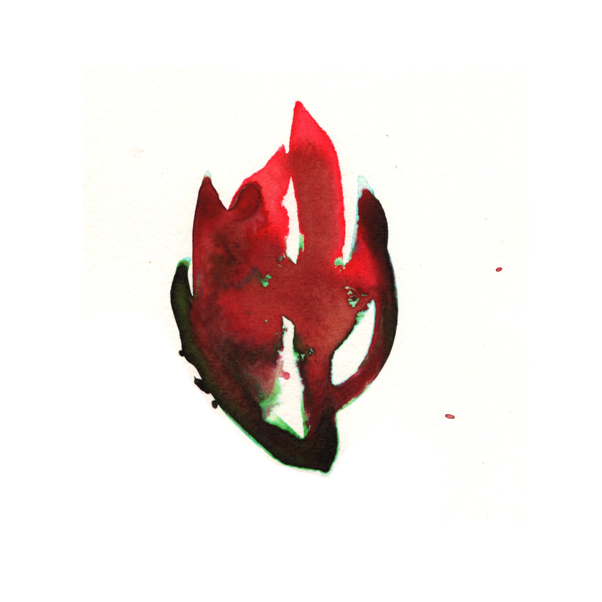 38.Leucadendron.3.18.15.jpg
