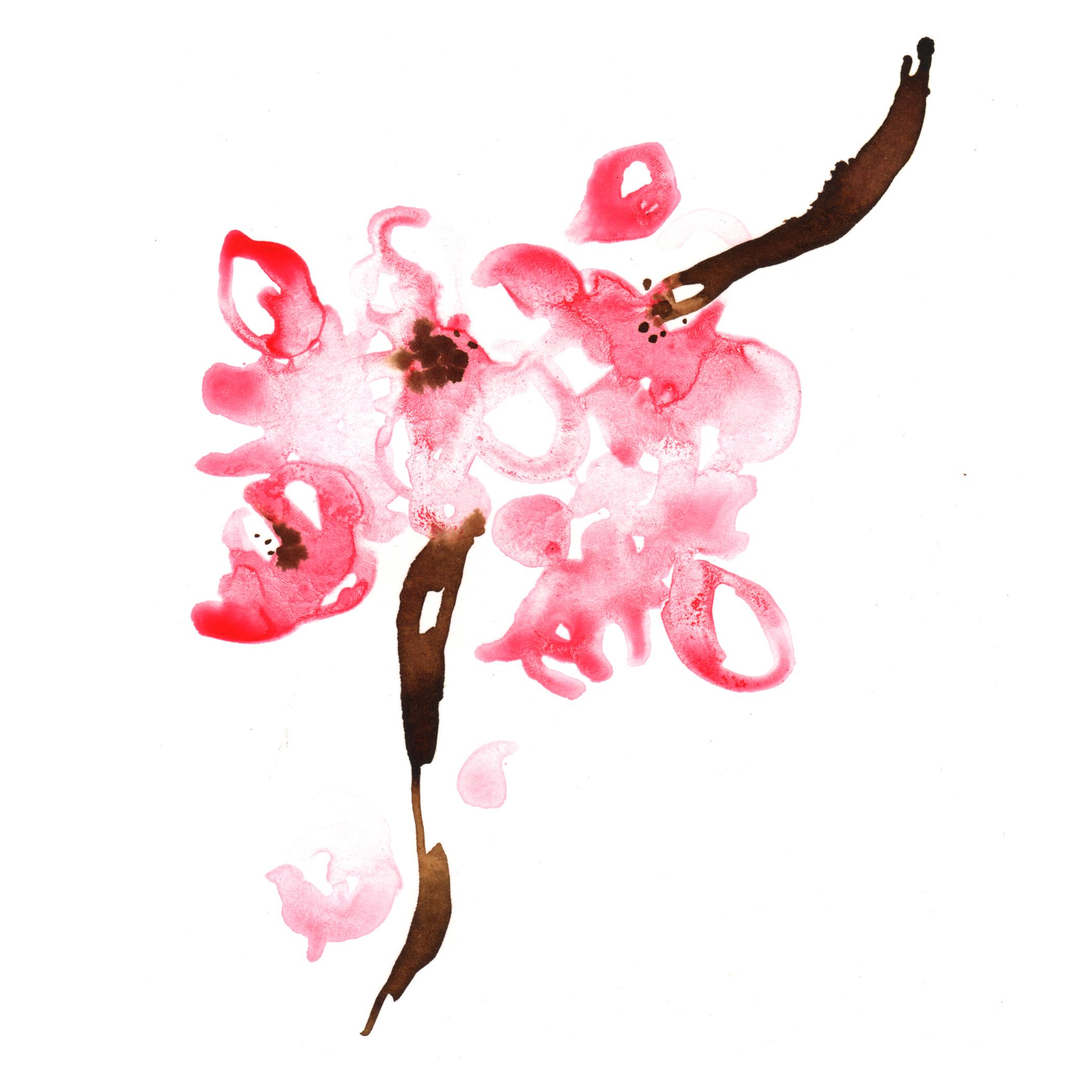 71.Cherry.Blossomes.4.20.14.jpg