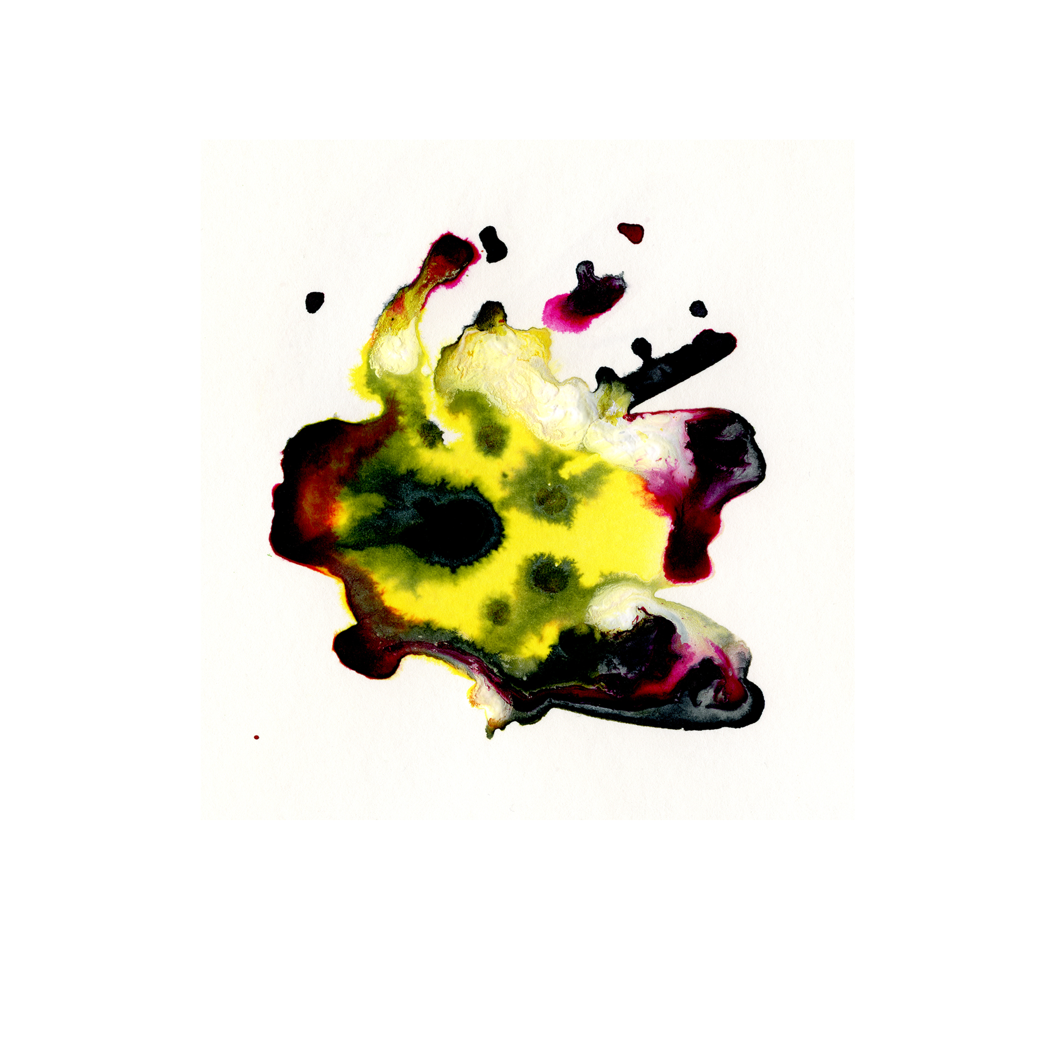 79.Daffodil.4.28.14.jpg