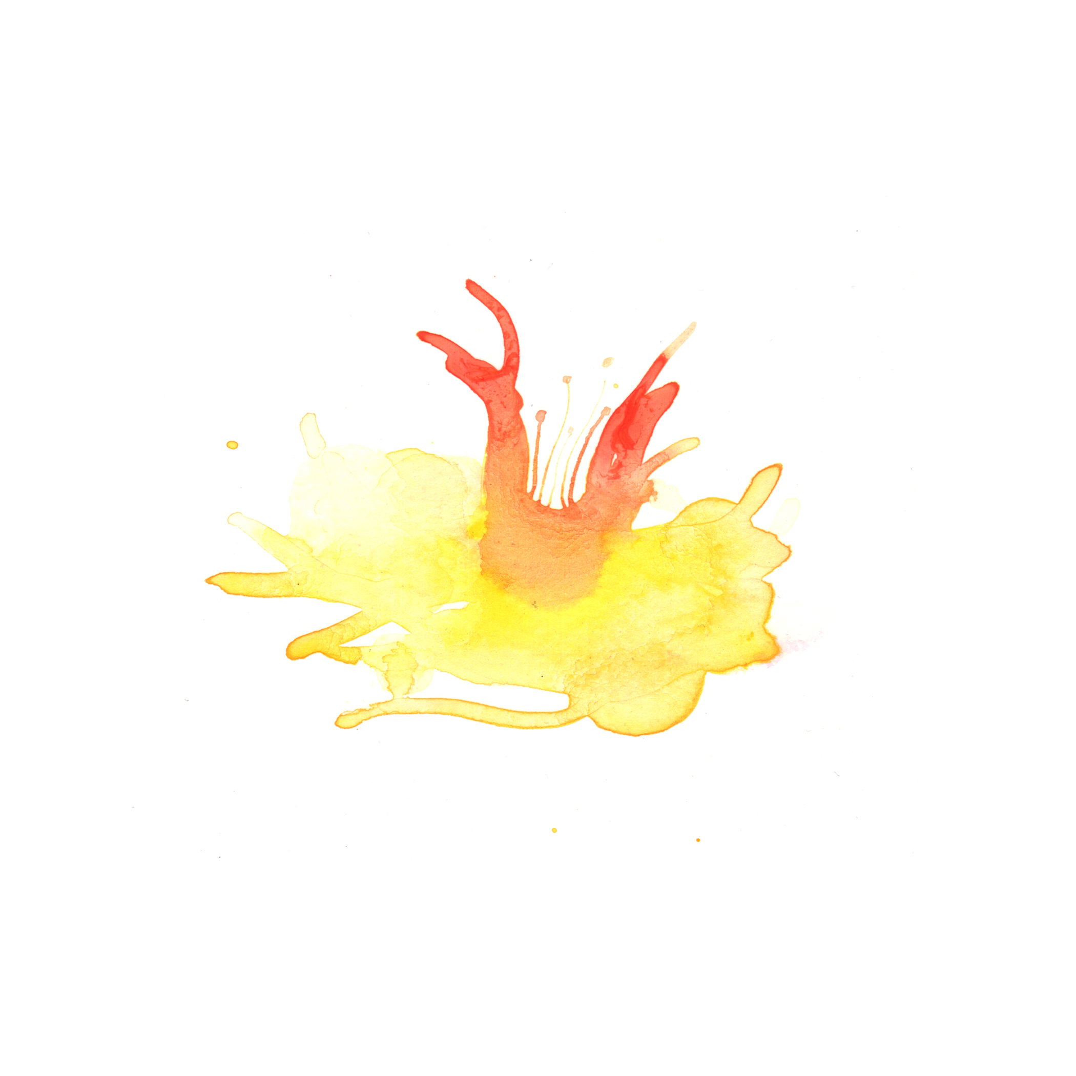 88.Daffodil.5.7.14.jpg