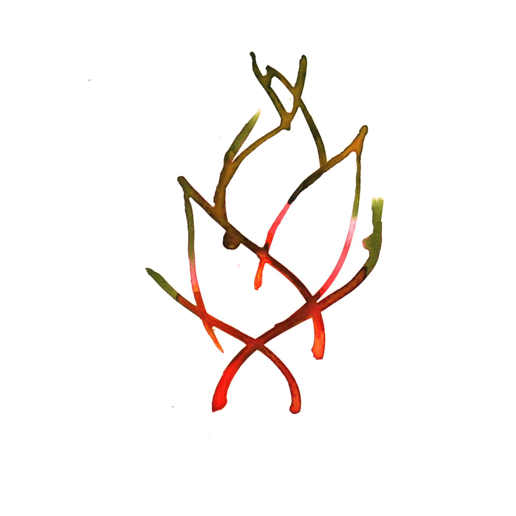 89.Helconia.5.8.14.jpg