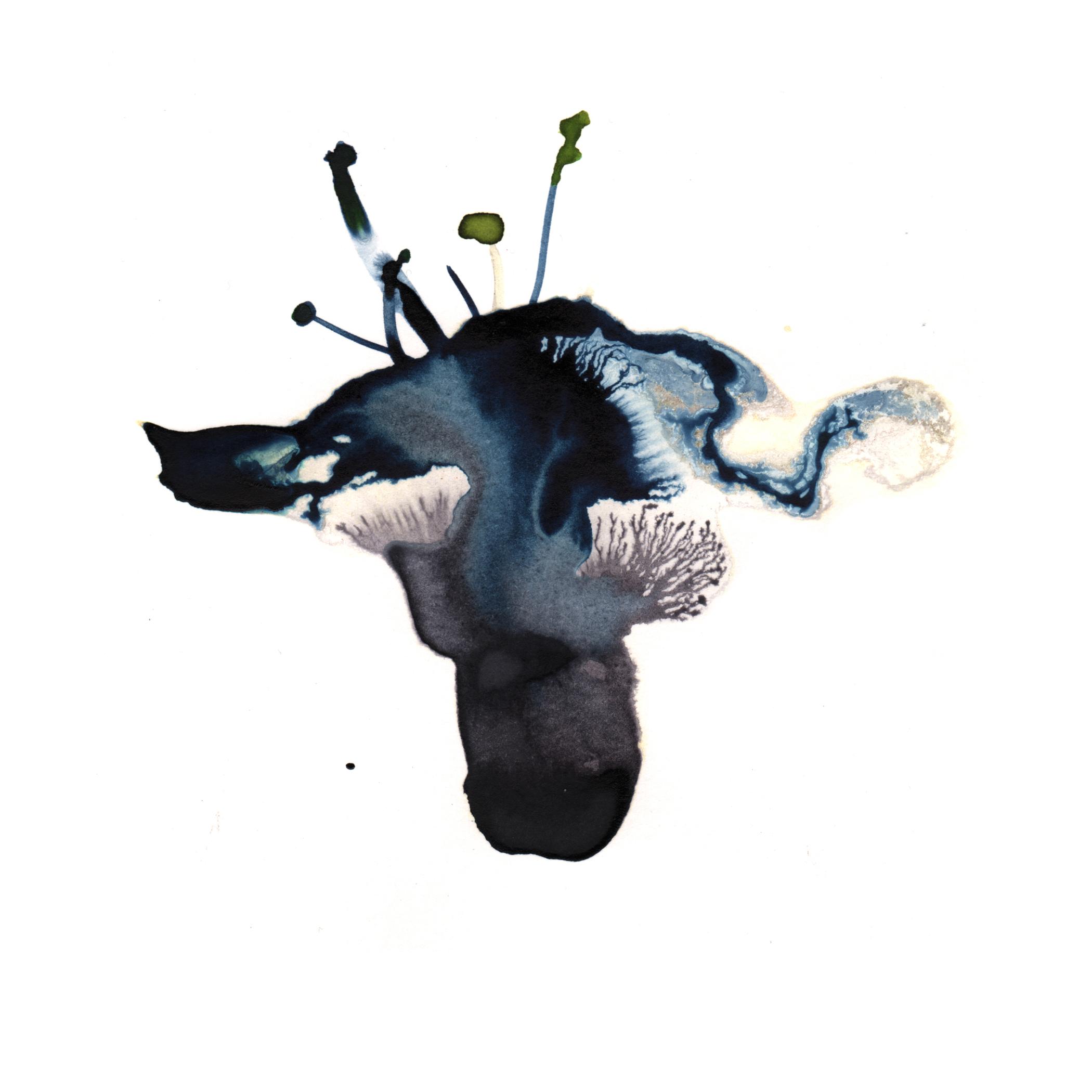 97.Fungi.5.16.14.jpg