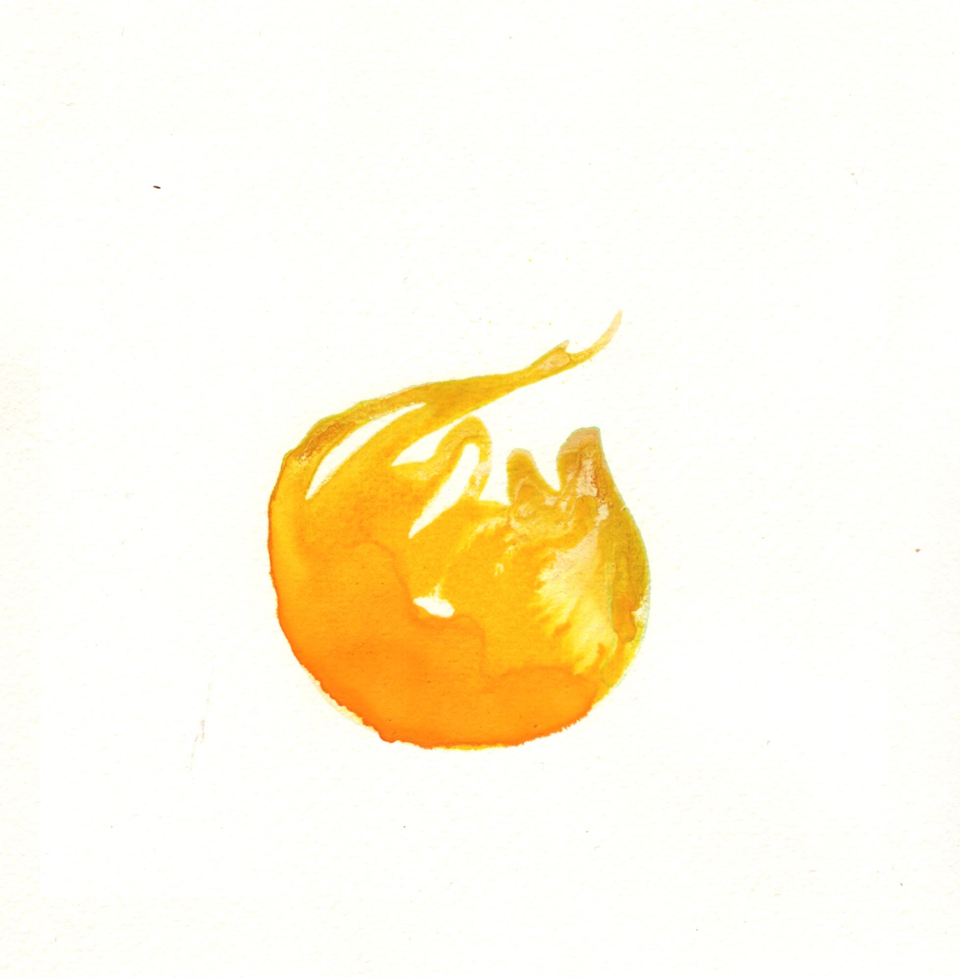 98.Ranunculus.Bud.5.17.14.jpg