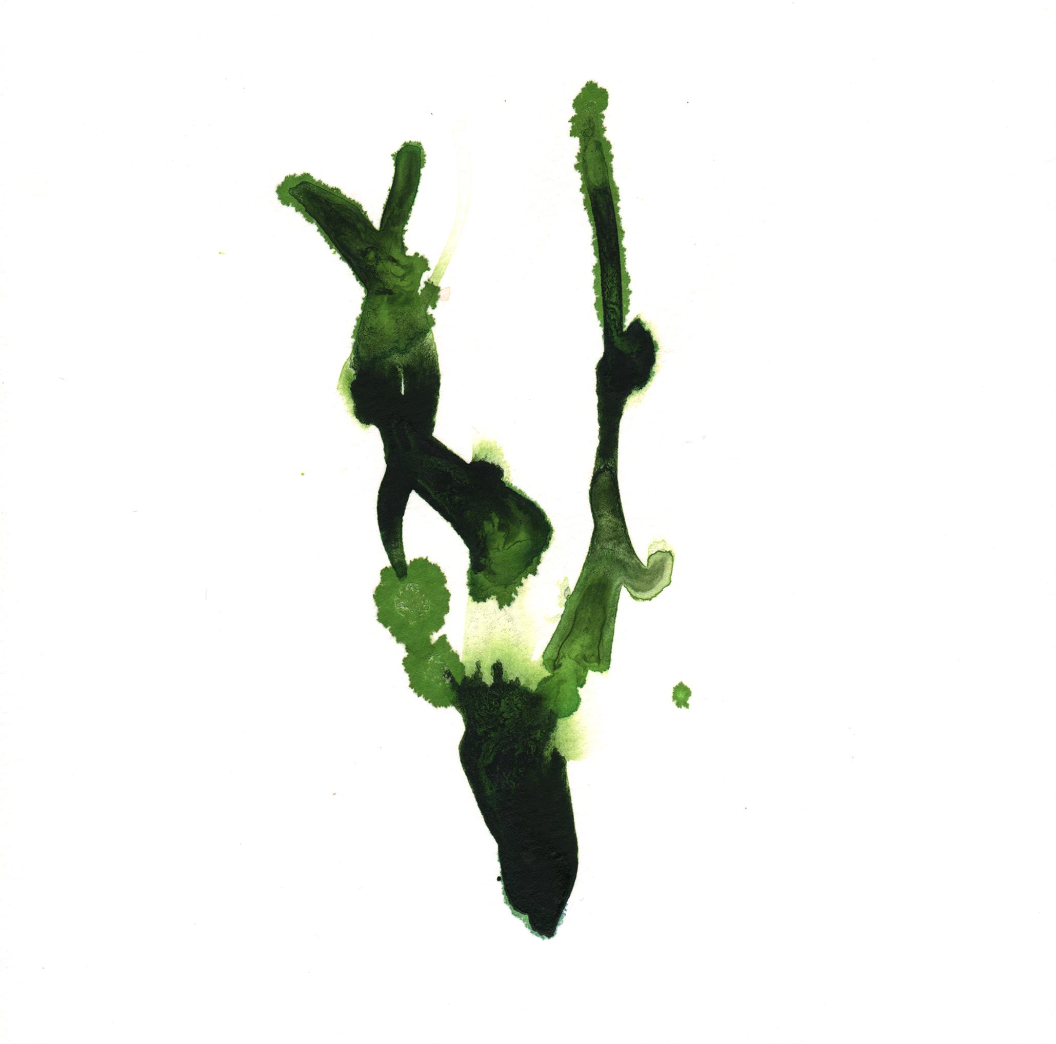 128.Kelp.6.16.14.jpg