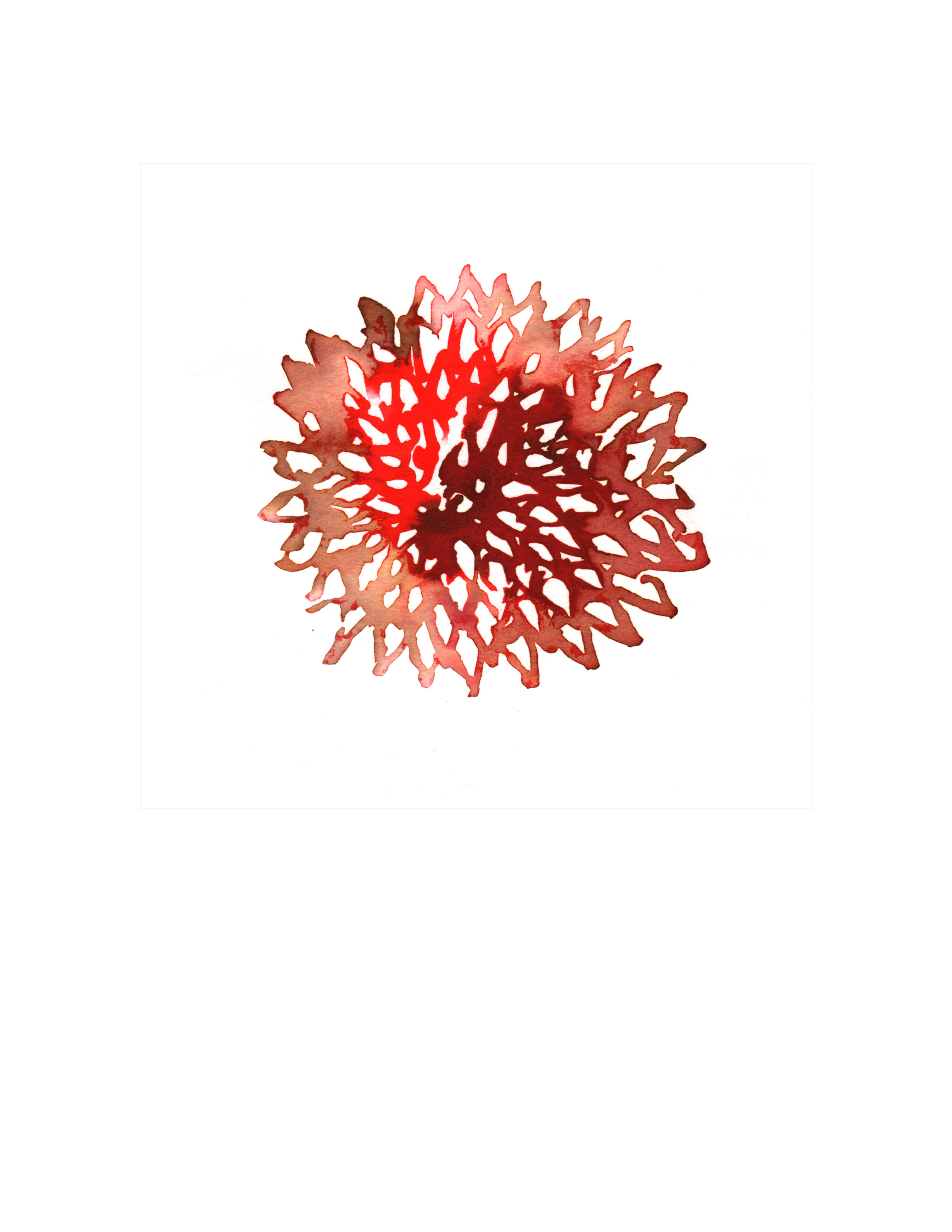 132.Red.Dahlia.6.20.14.jpg