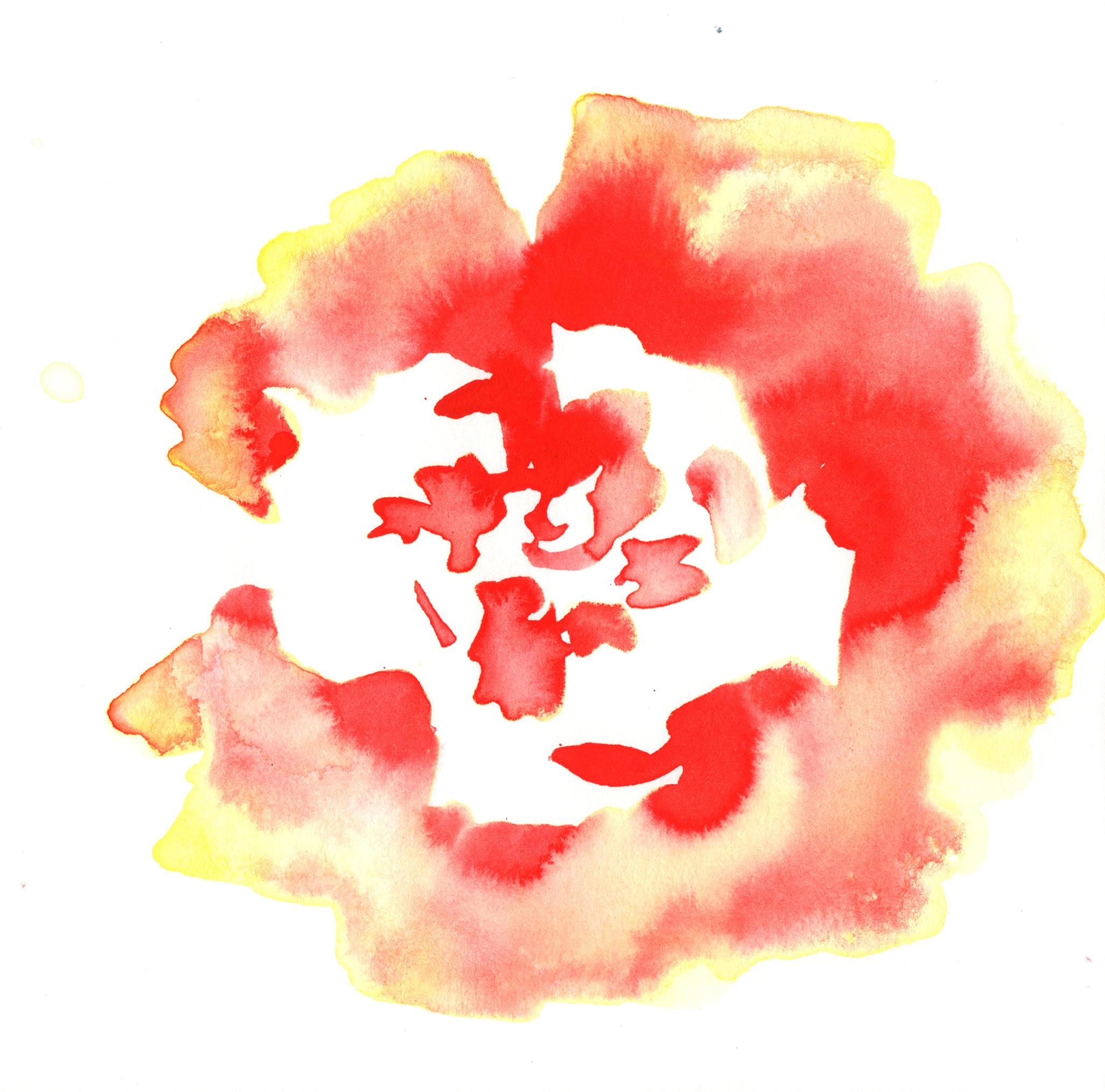 145.Begonia.7.3.14.jpg