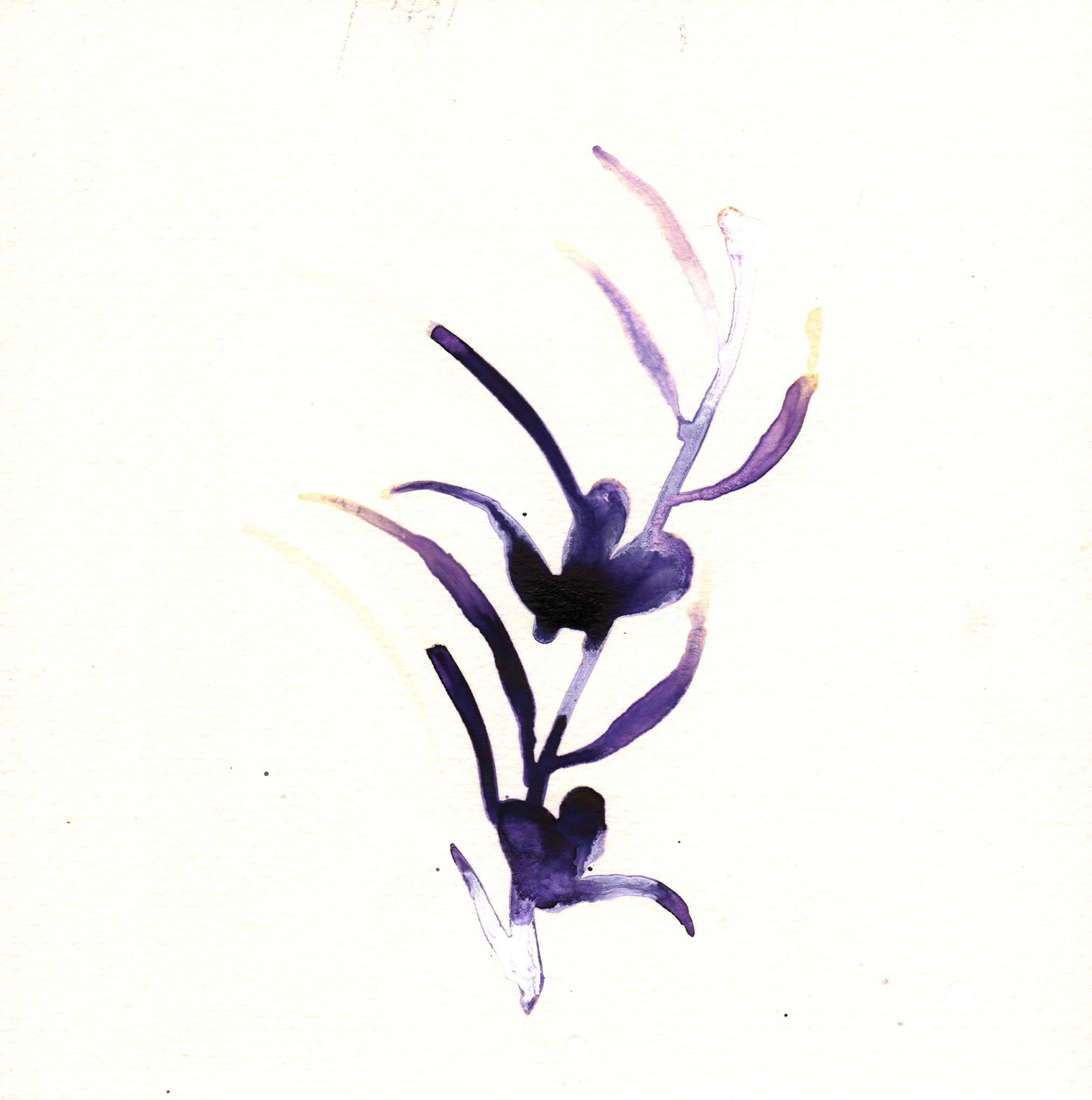 152.Lavender.7.10.14.jpg