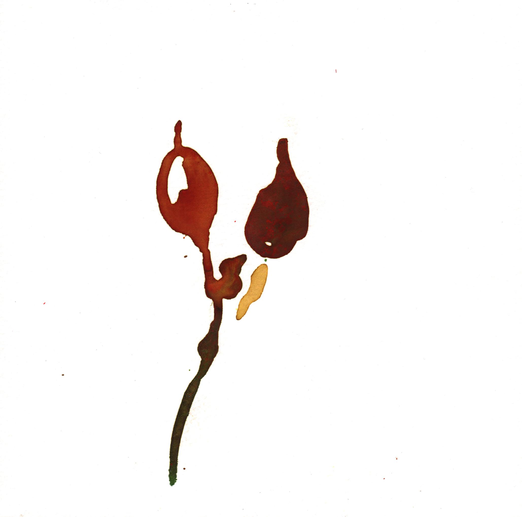 163.Seaweed.7.21.14.jpg