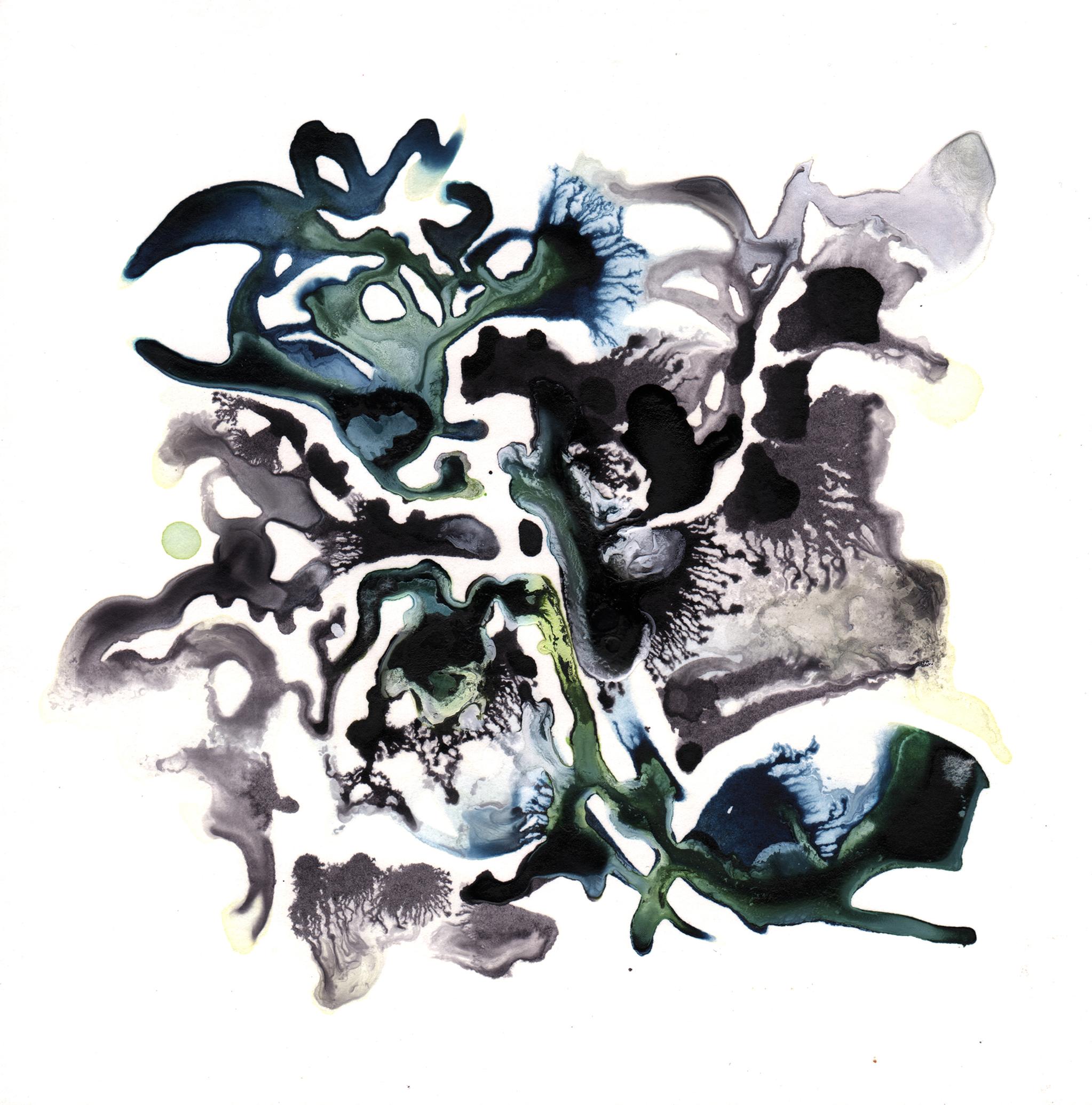 167.Kelp.7.25.14.jpg
