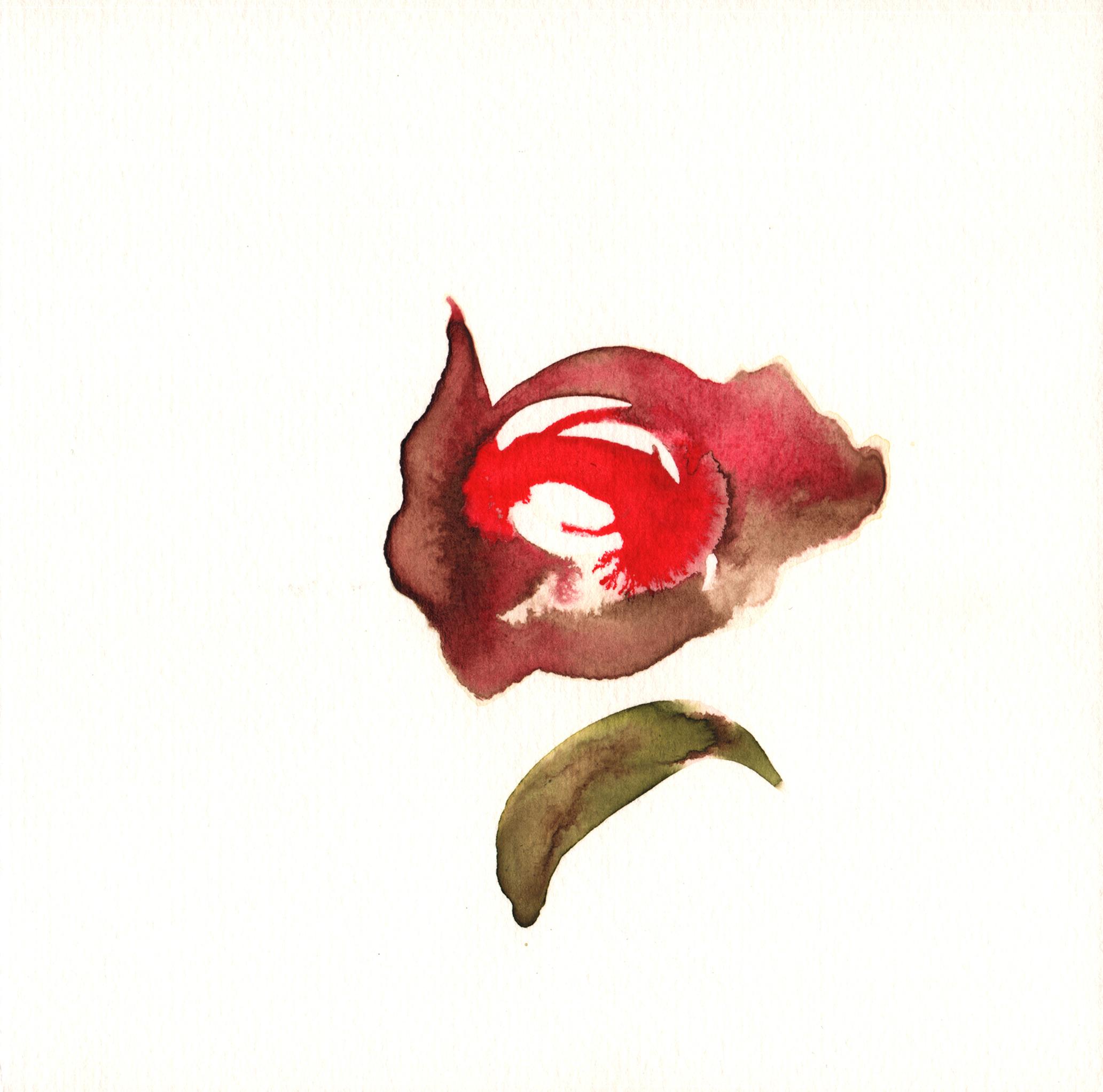 181.Rose.Hip.8.8.14.jpg
