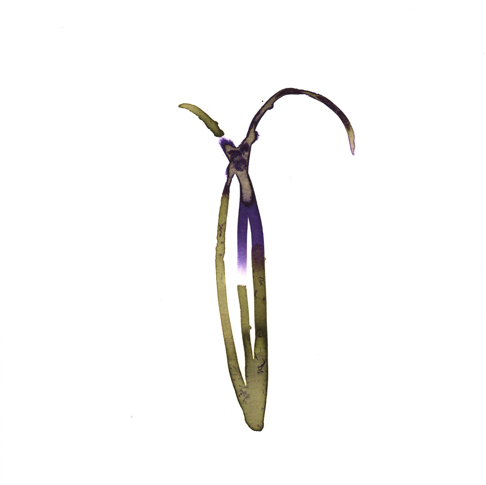 188.Wild.Grass.8.15.14.jpg