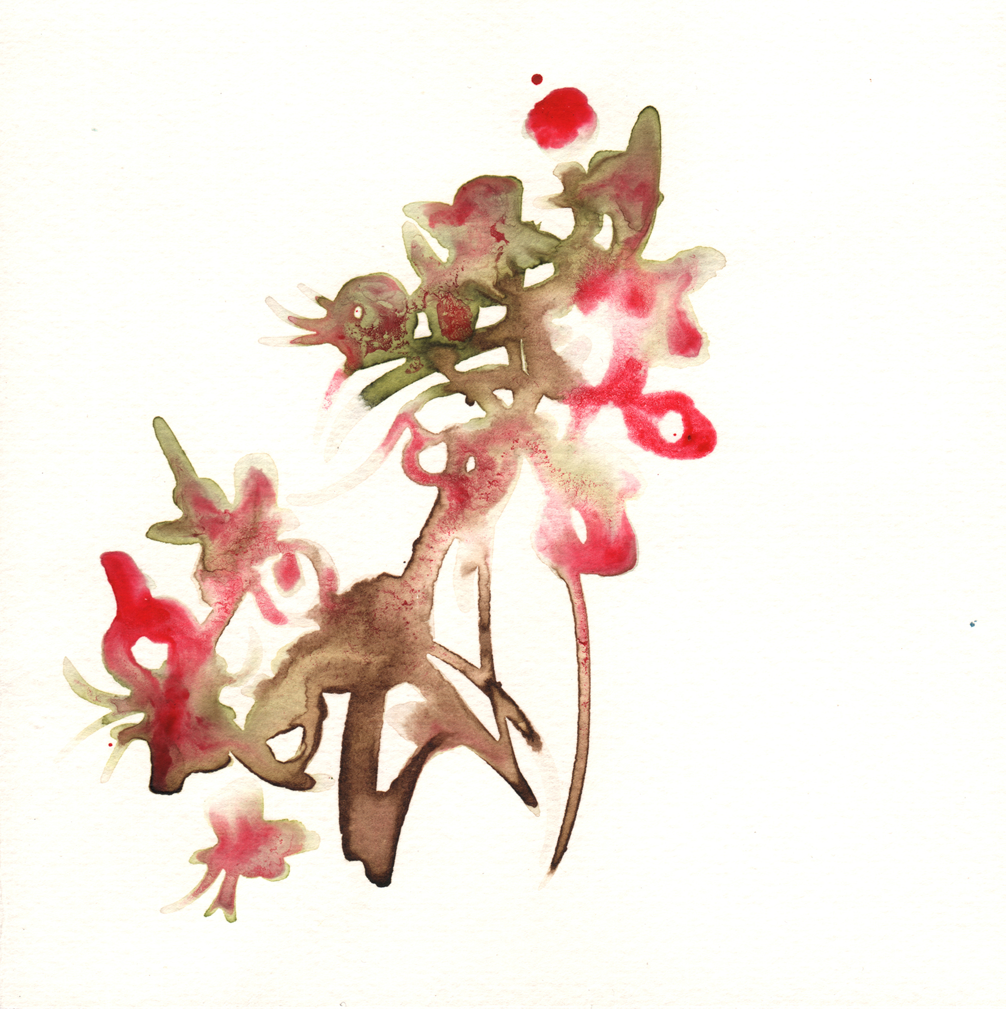 227.Crab.Apple.Blossoms.9.23.14.jpg