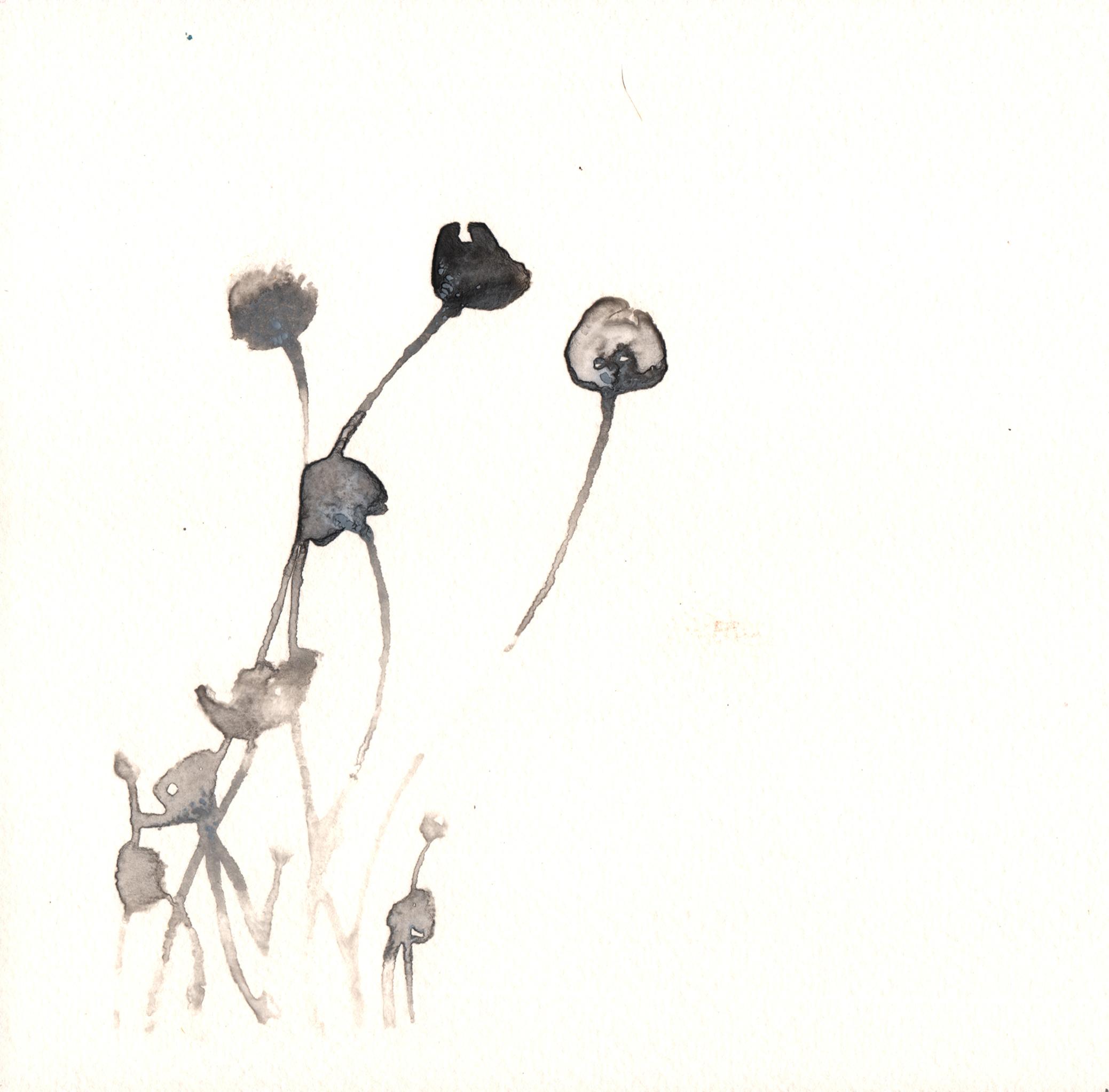 230.Petticoat.Mottlegill.9.26.14.jpg