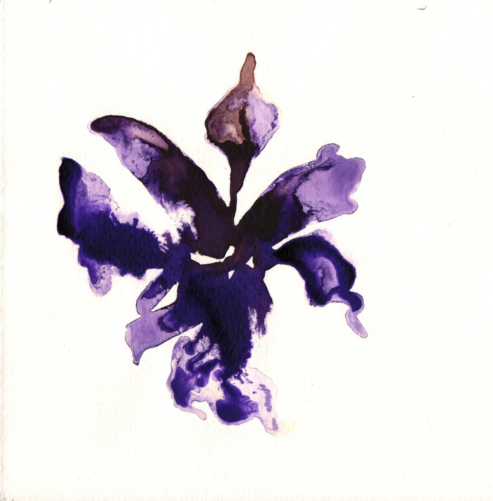 241.Iris.Chrysographes.10.7.14.jpg