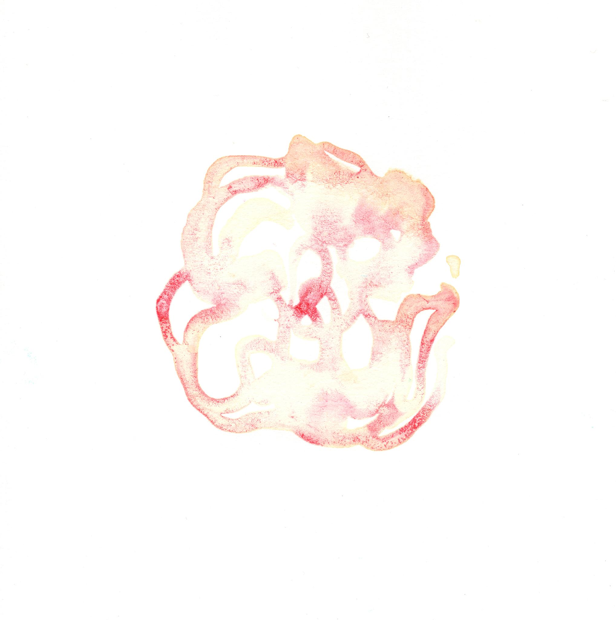 252.Dianthus.10.18.14.jpg