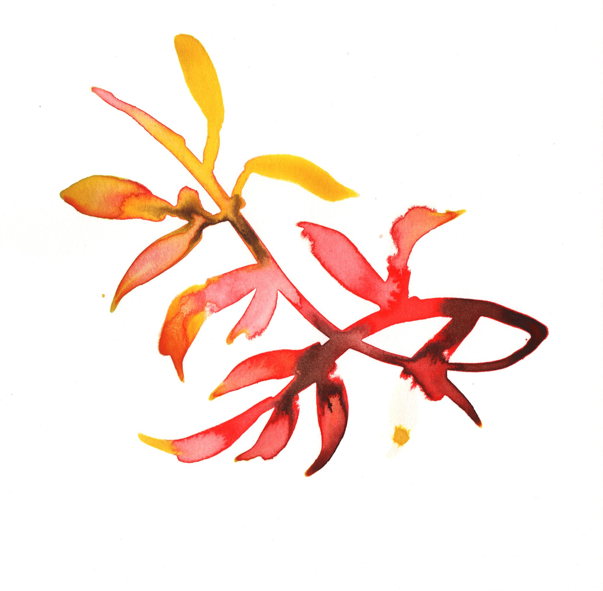 260.Kelp.10.26.14.jpg