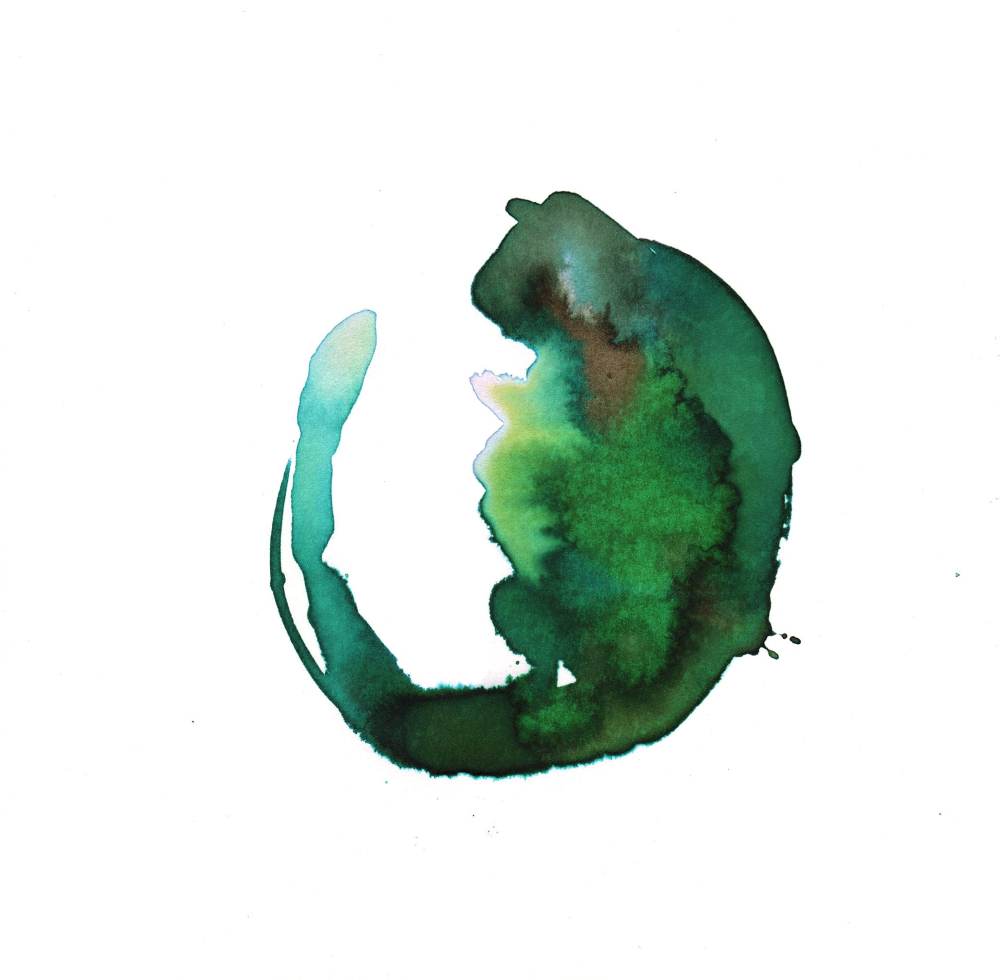292.Green.Parrot.Tulip.11.27.14.jpg