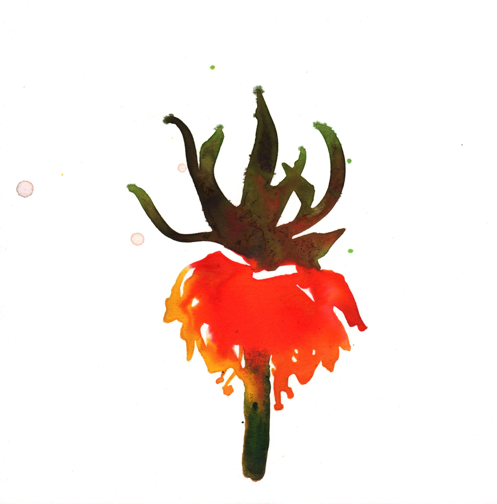 323.Fritillaria.Imperia.12.28.14.jpg