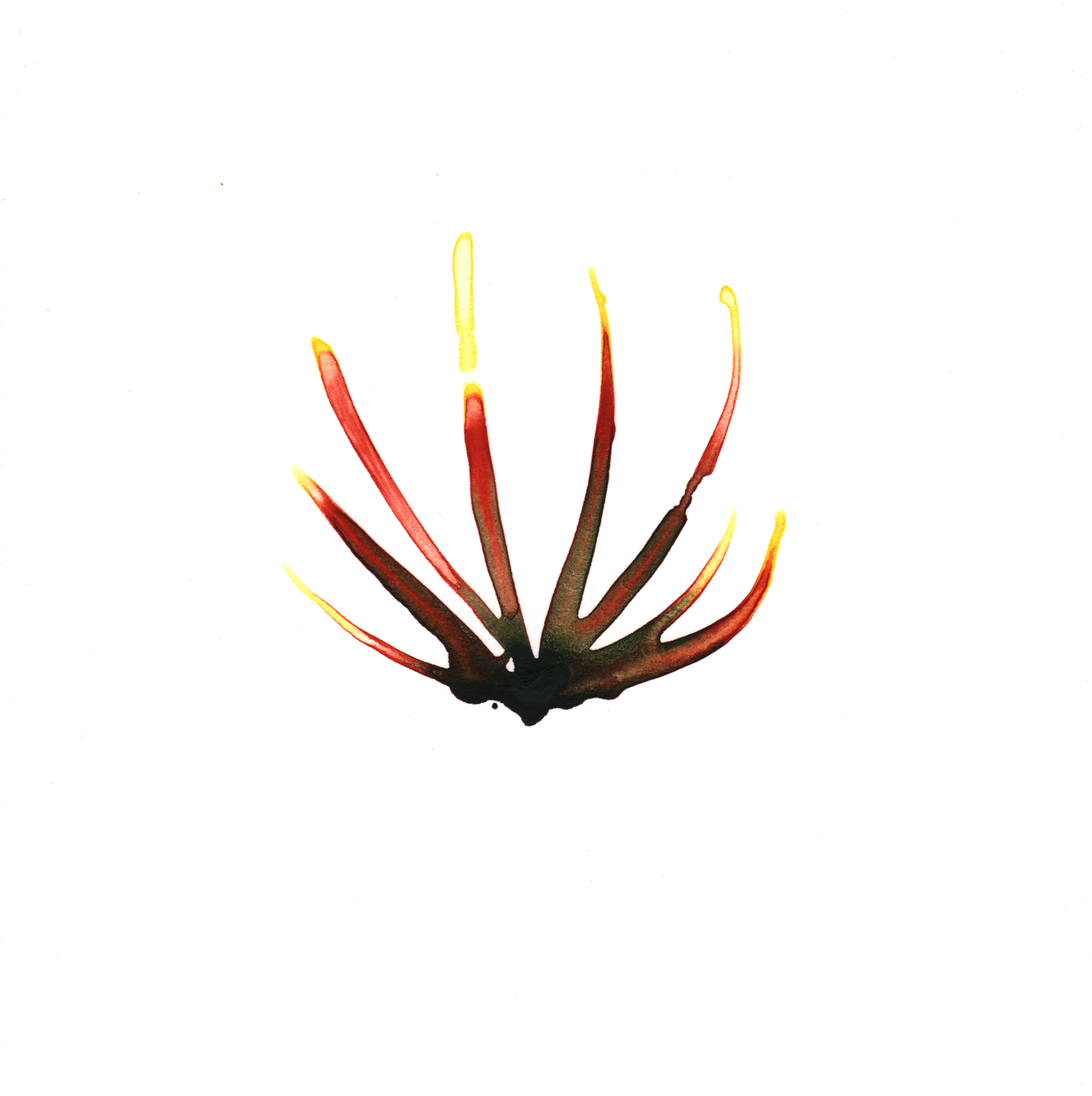 326.Palm.Frond.12.31.14.jpg