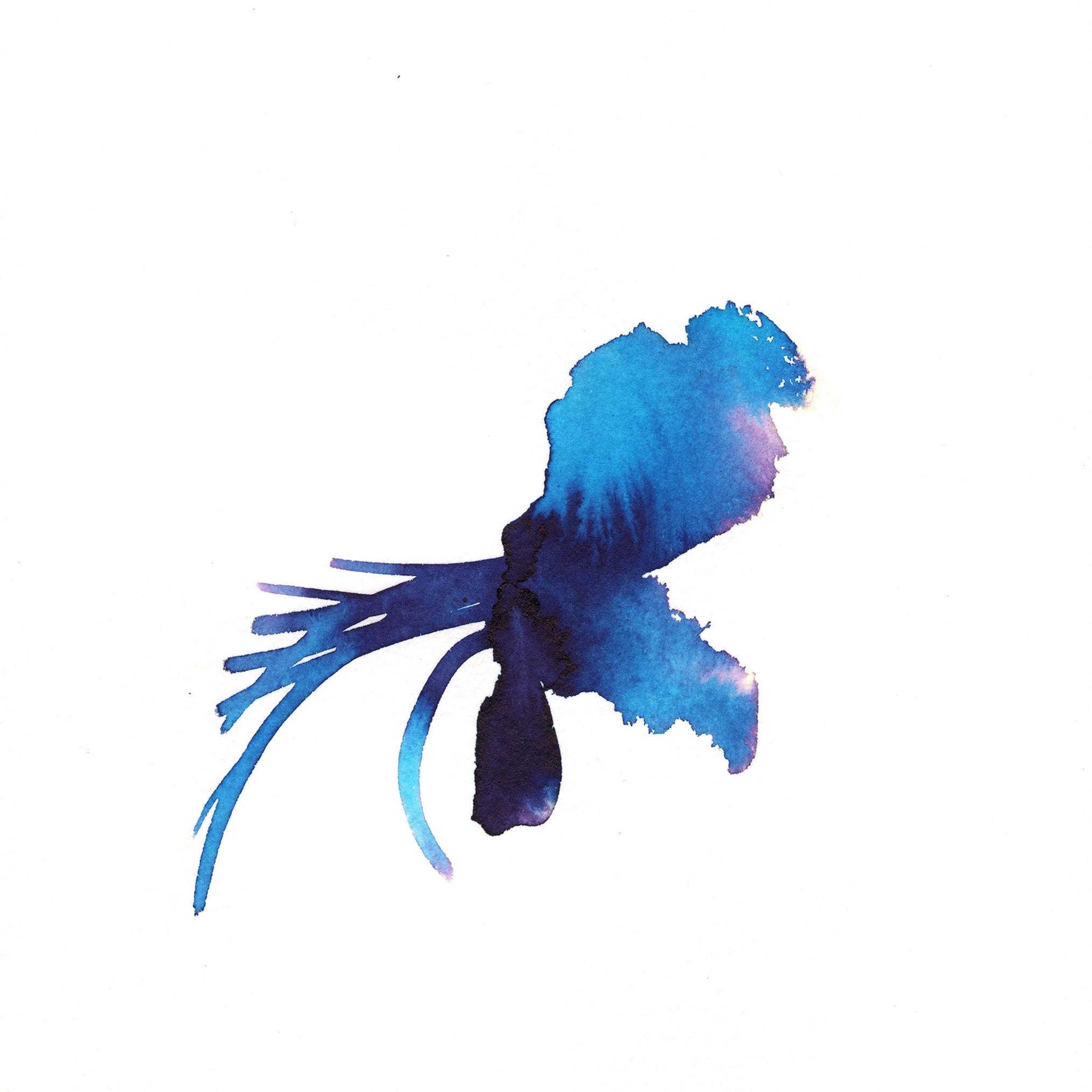 272.Blue.Orchid.11.7.14.jpg
