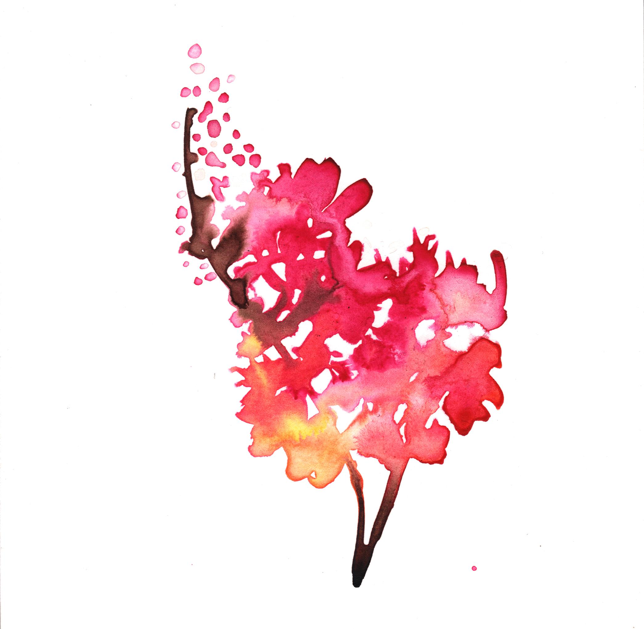 356.Pink.Plum.Blossoms.1.30.15.jpg