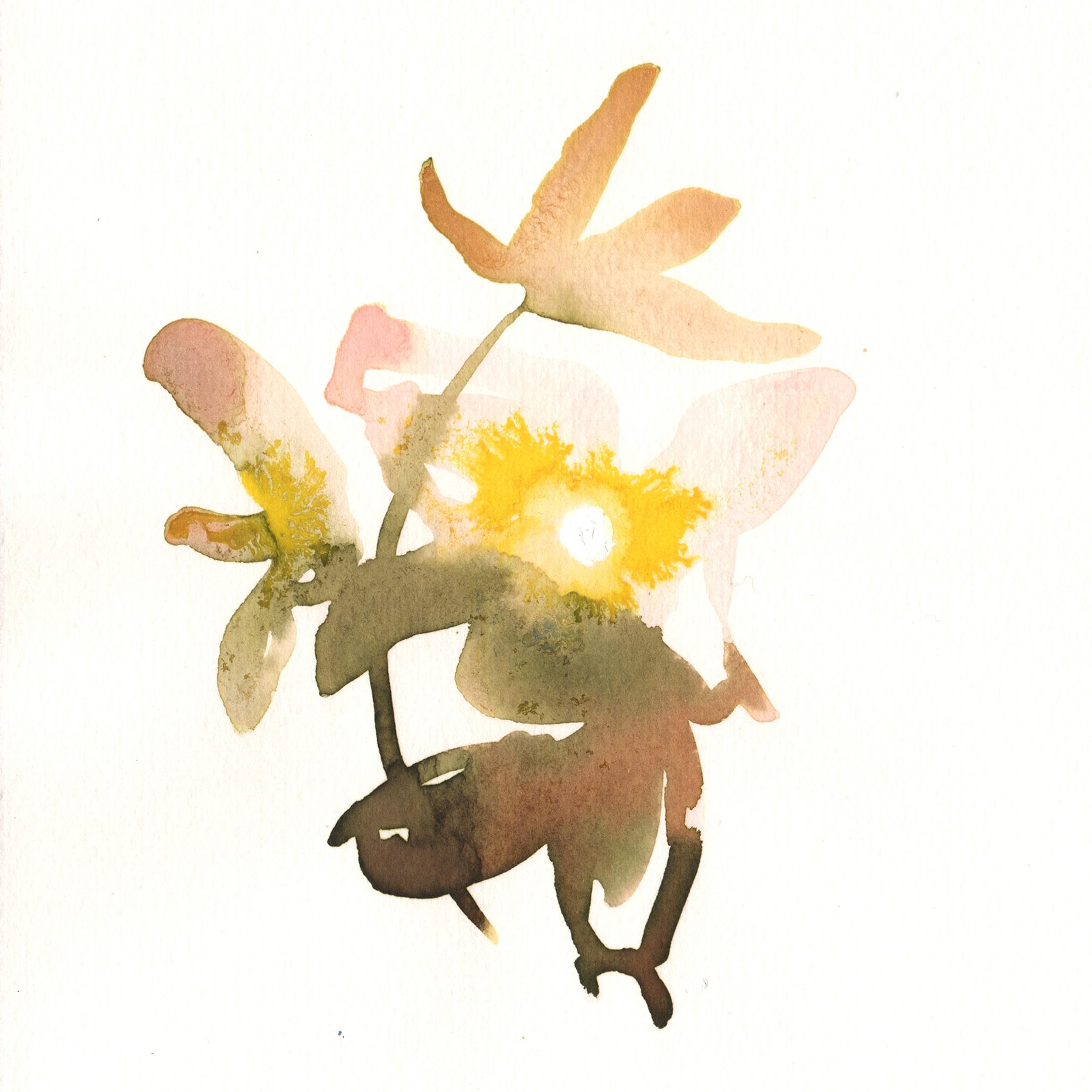 214.Organge.Blossom.9.10.14.jpg