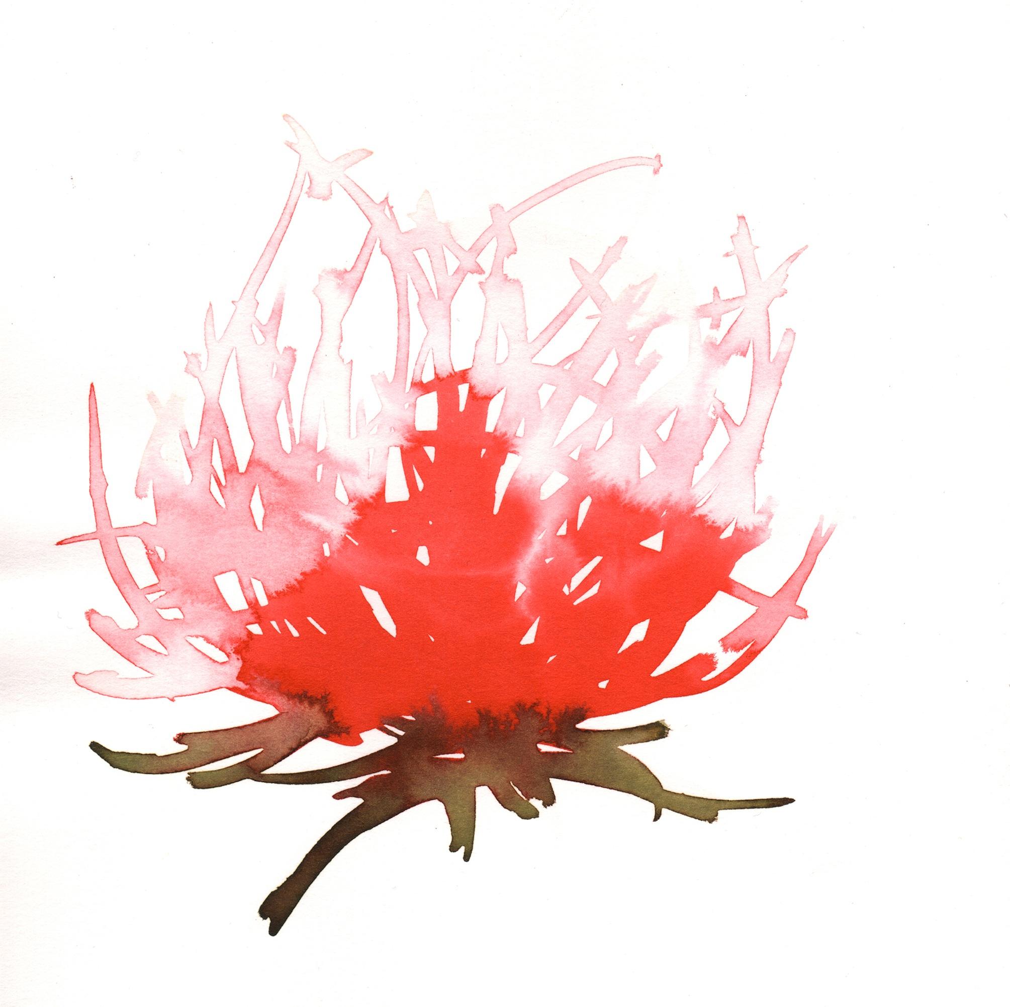 255.Blood.Lily.10.21.14.jpg