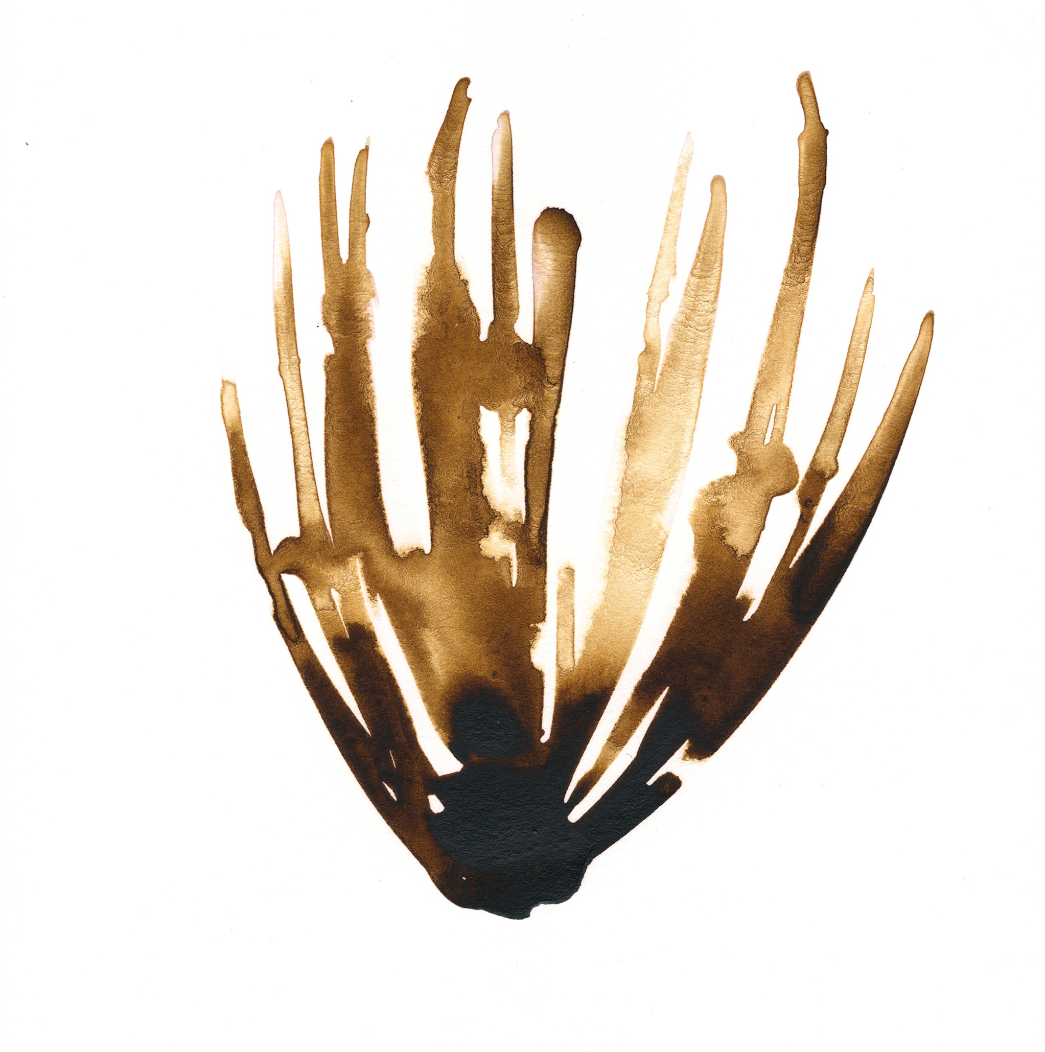 335.Palm.Frond.1.9.15.jpg