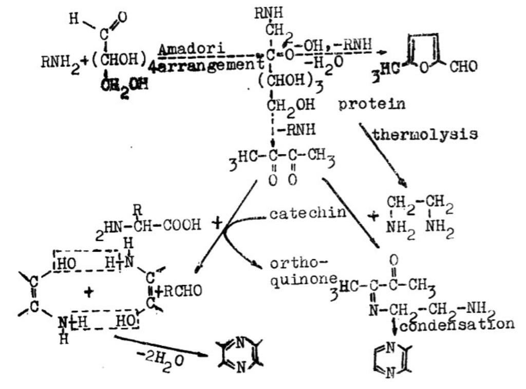 由梅納反應與Strecker降解反應生成氮、氧雜環化合物之過程