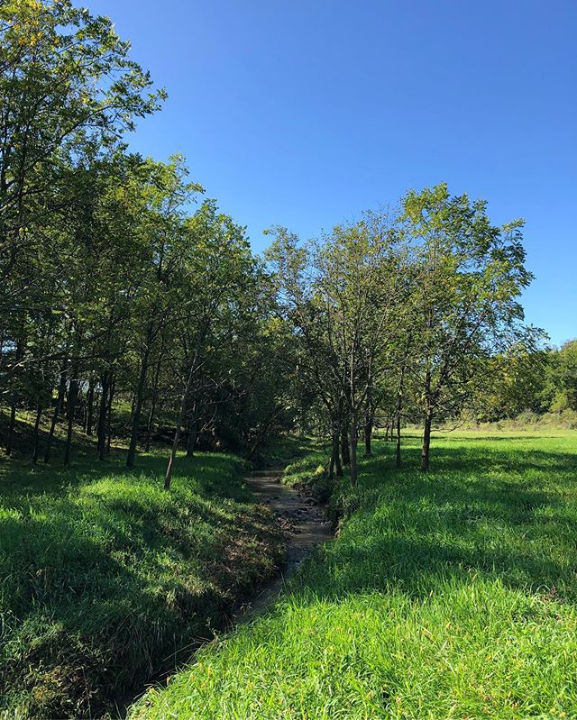 Glorious fall pasture. #grasfedbeef #oconnellorganicacres #oconnellorganicacresmeat #organicmeat #iowabeef #organicbeef #ooa #eatlocal #knowyourfarmer #farmtotable #greenpastures #pastureraisedbeef
