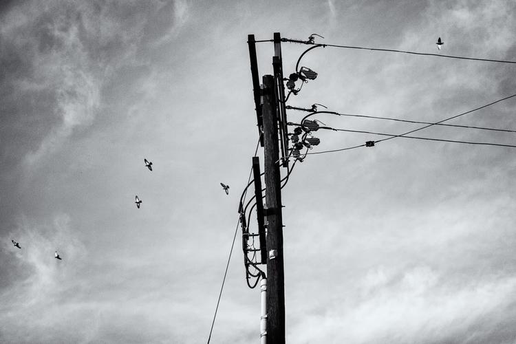 telephonpole.jpg