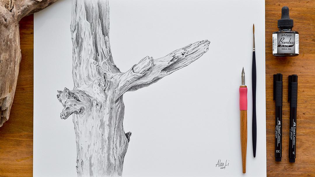 Driftwood_WilketCreekRavine.jpg