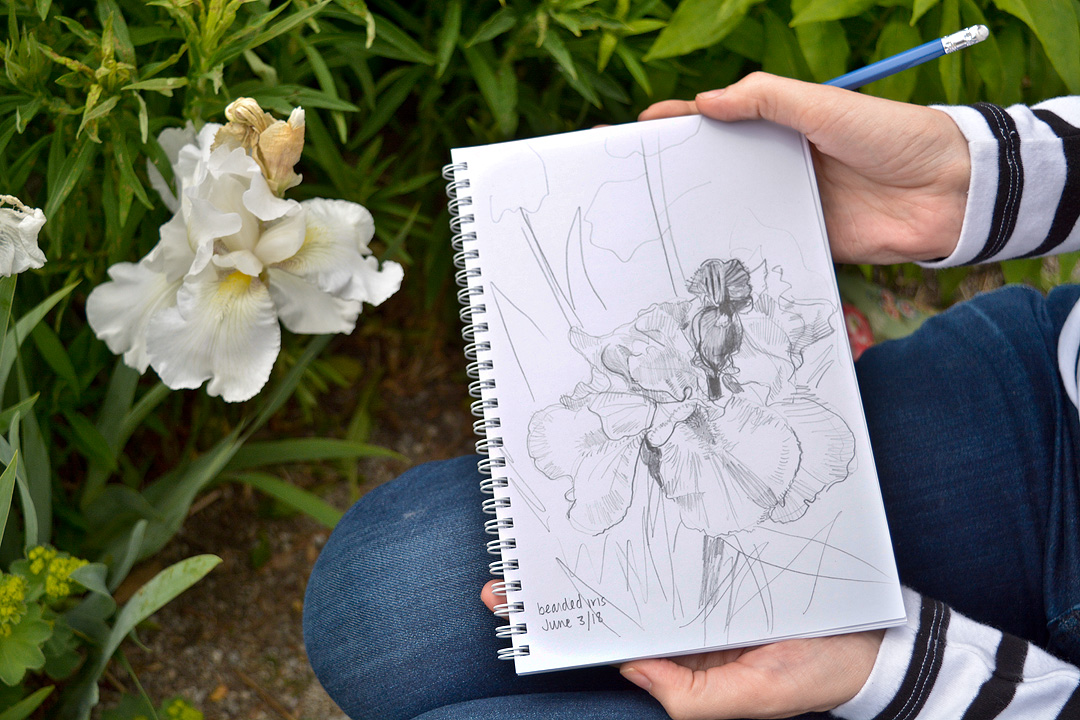 Plant sketching on location at Toronto Botanical Garden.