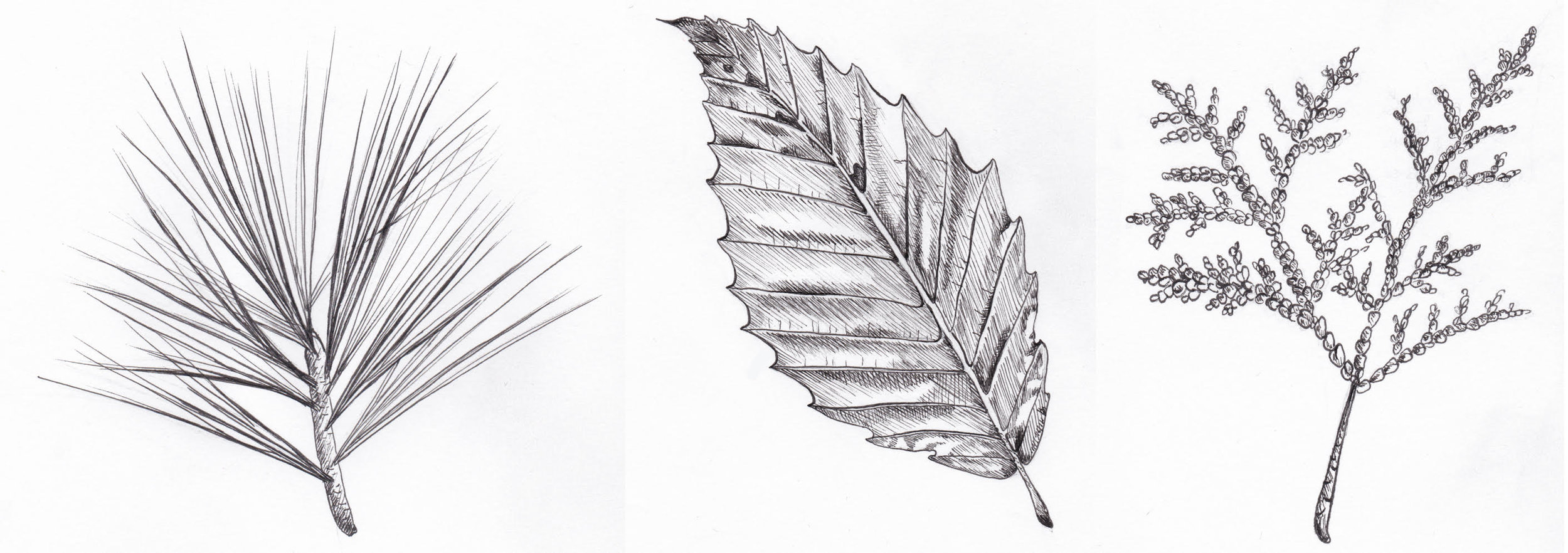 PenSketches.jpg