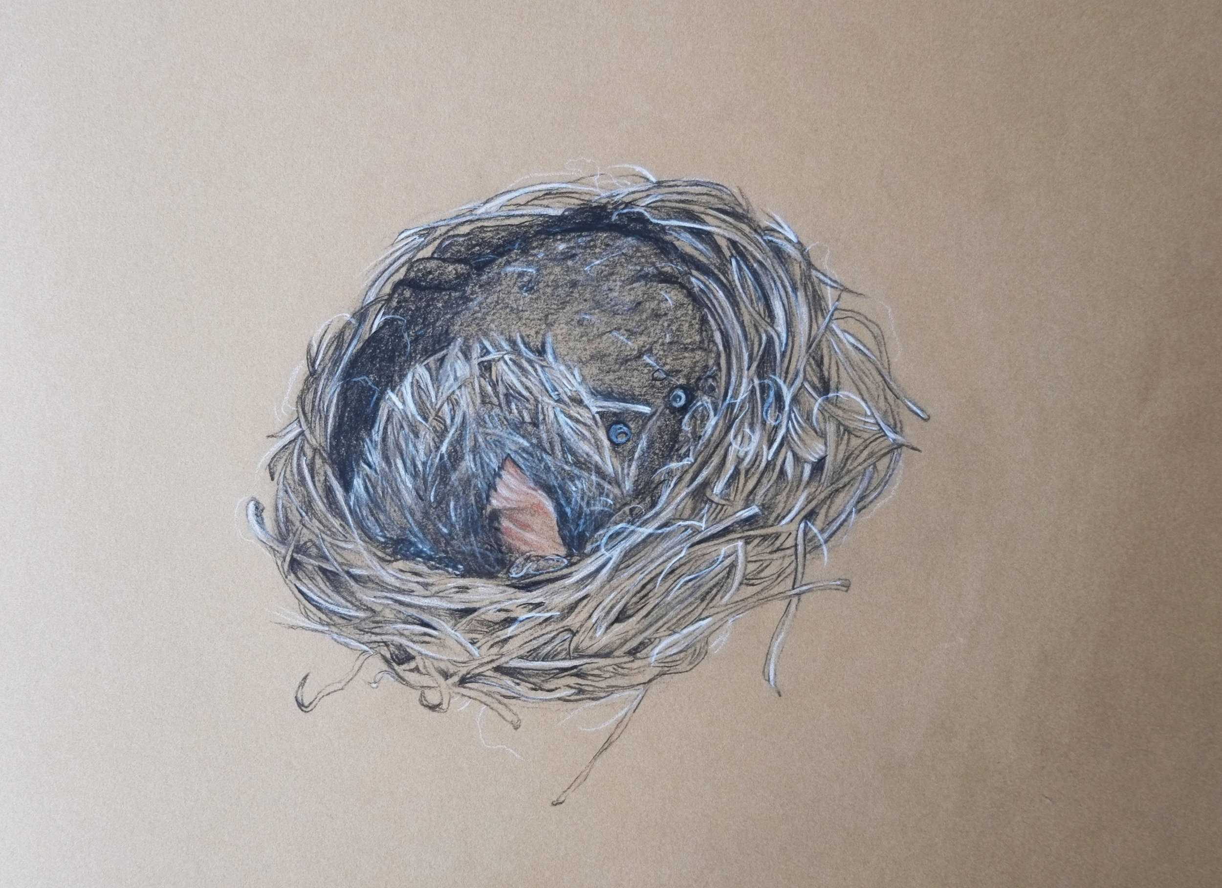 Cup nest drawing by Victoria. Charcoal and chalk on Kraft paper.