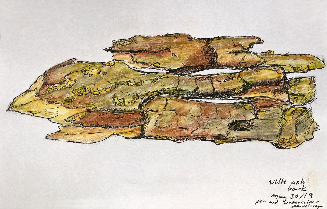 Sketch by Malgosia.